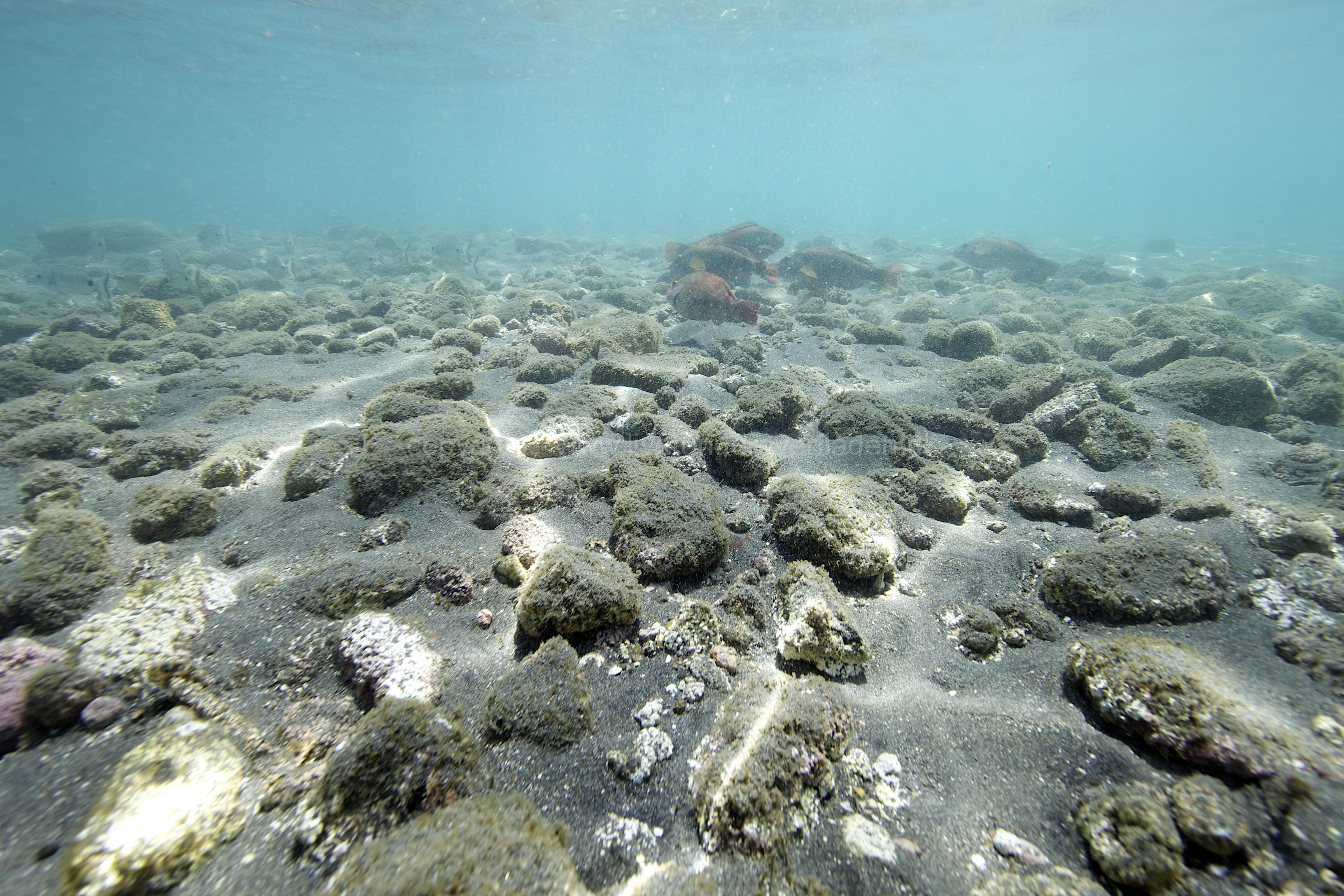 Marine habitat_Martin_Kielland 58