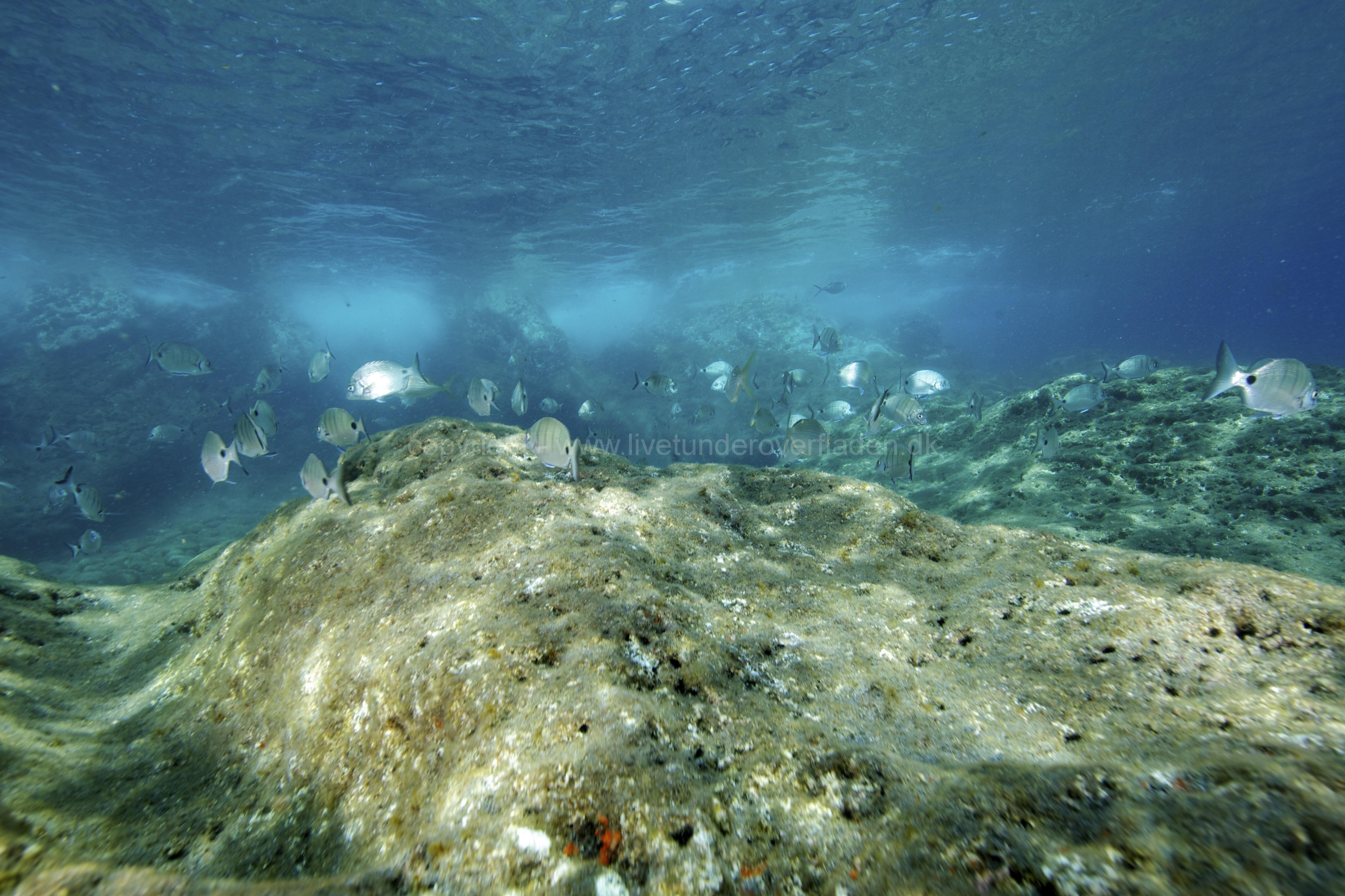 Marine habitat_Martin_Kielland 59