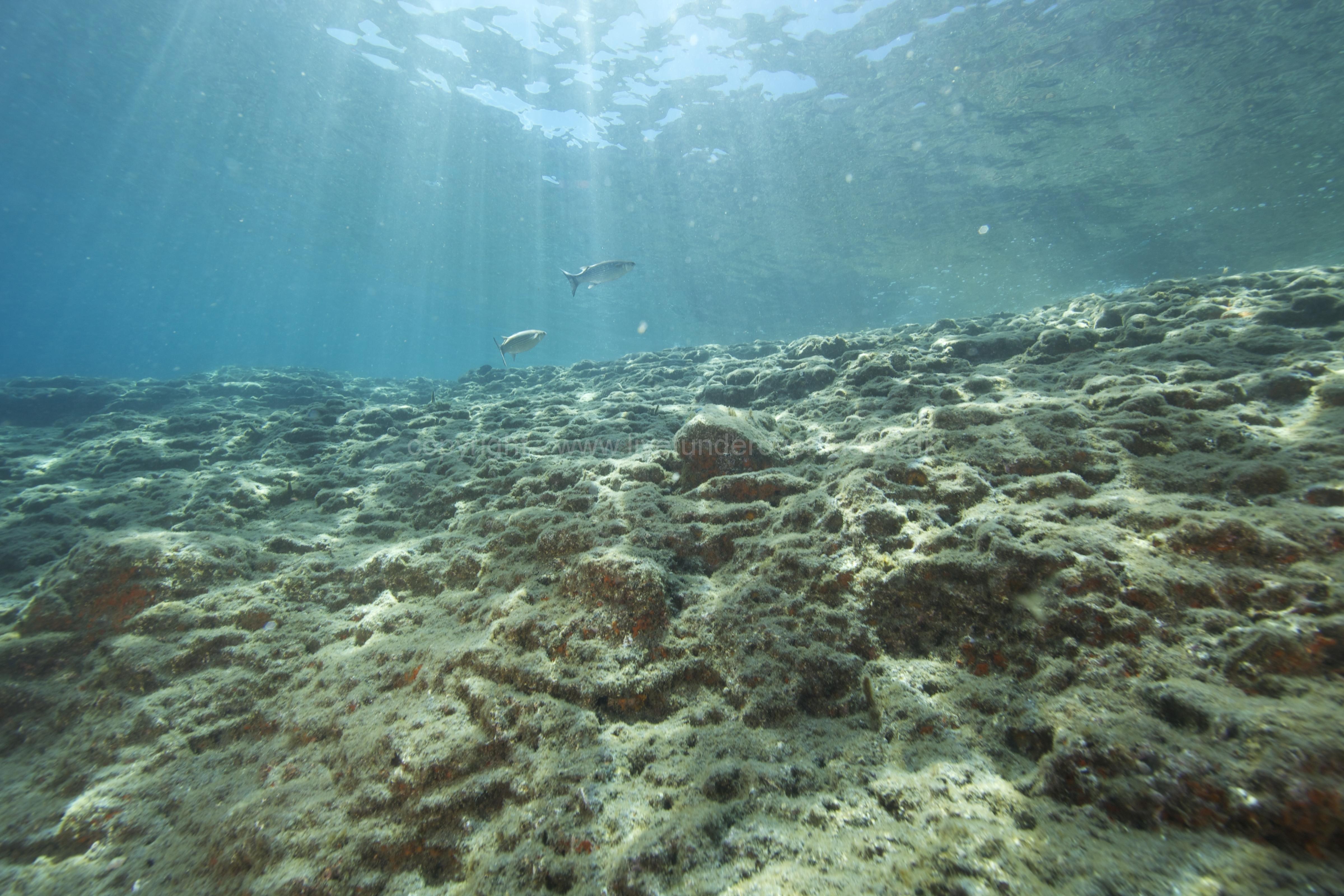 Marine habitat_Martin_Kielland 63