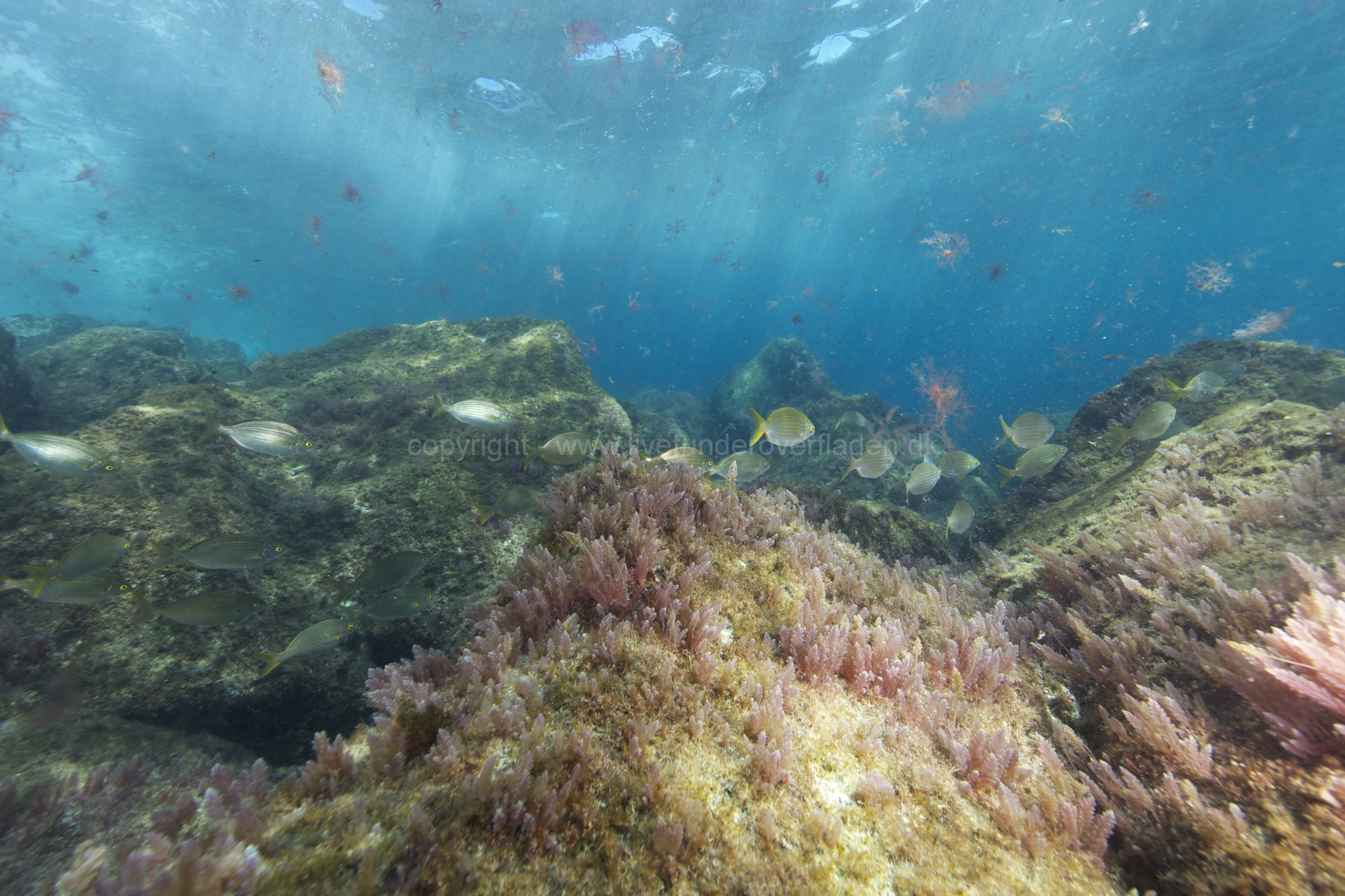 Marine habitat_Martin_Kielland 64