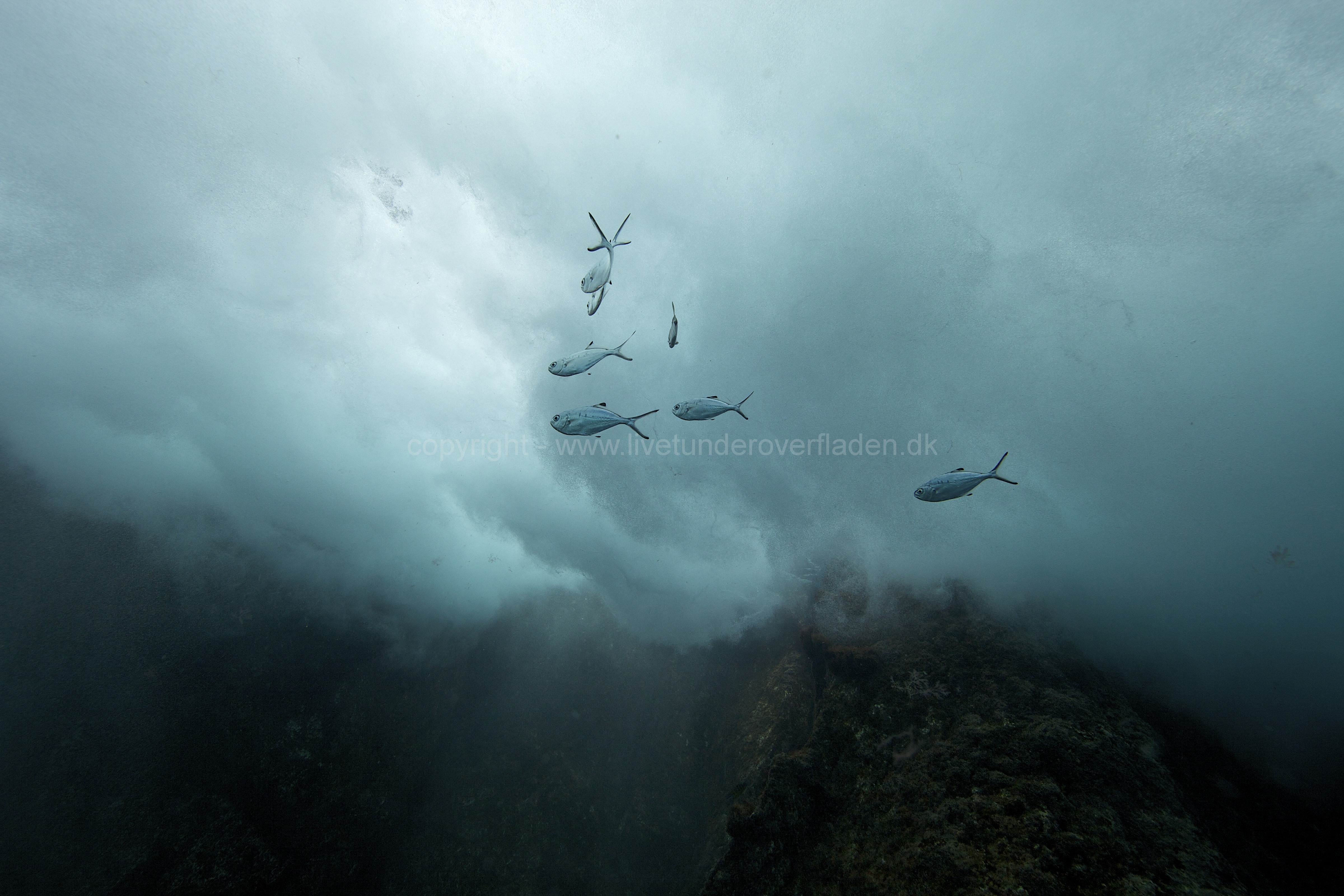 Marine habitat_Martin_Kielland 67