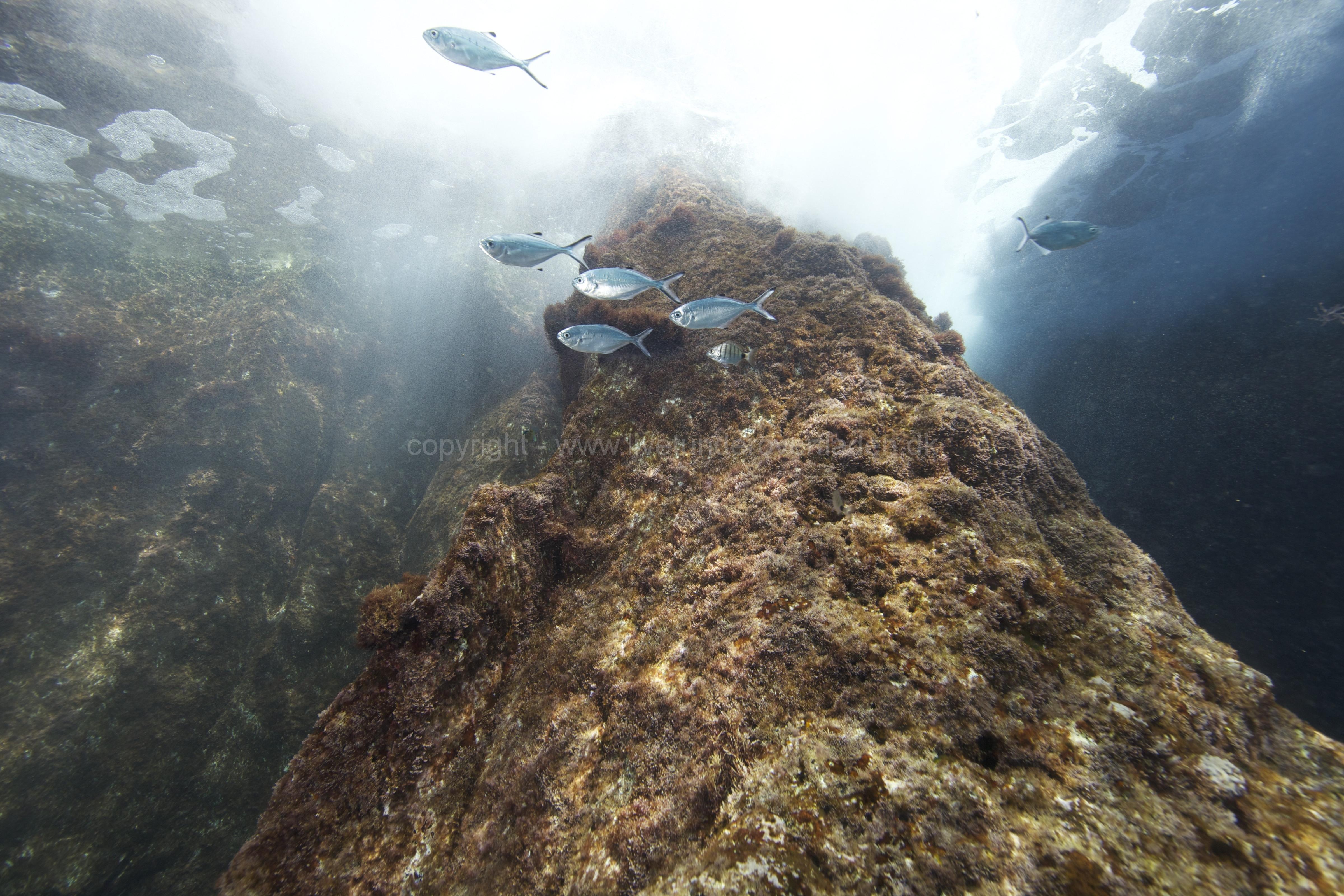 Marine habitat_Martin_Kielland 69