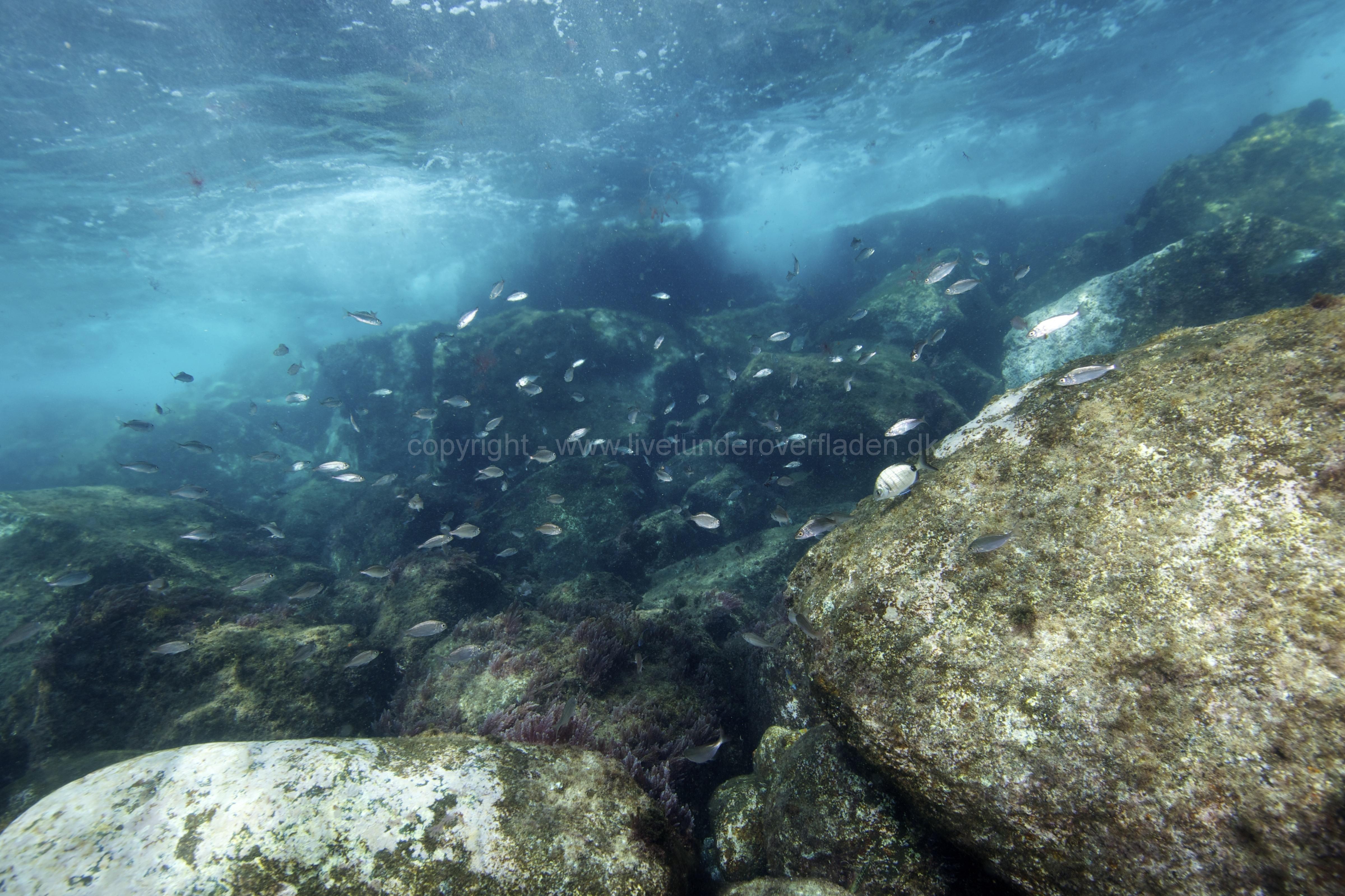 Marine habitat_Martin_Kielland 70