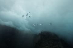 Marine habitat_Martin_Kielland 66