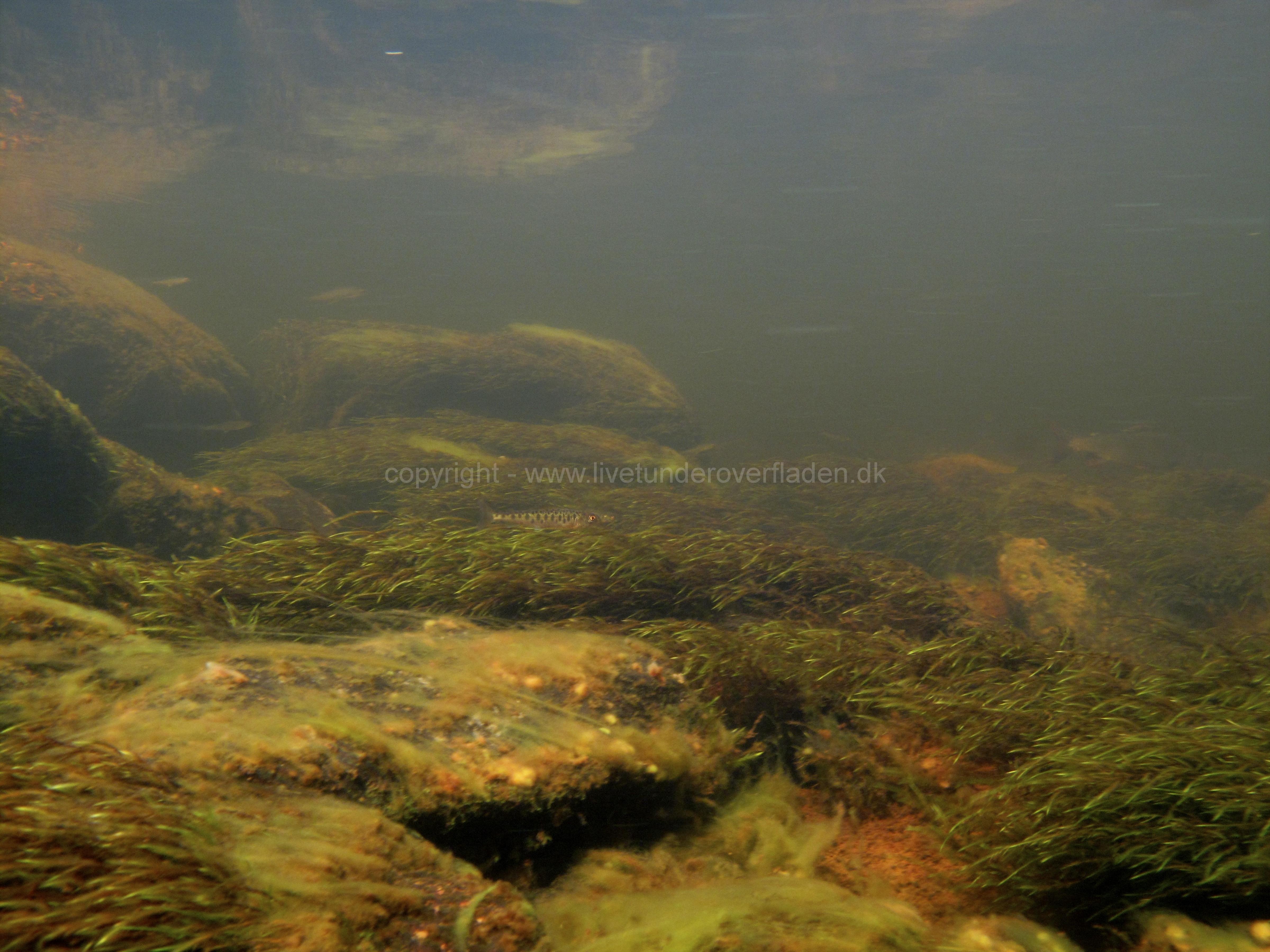 Freshwater habitat_Martin_Kielland 12