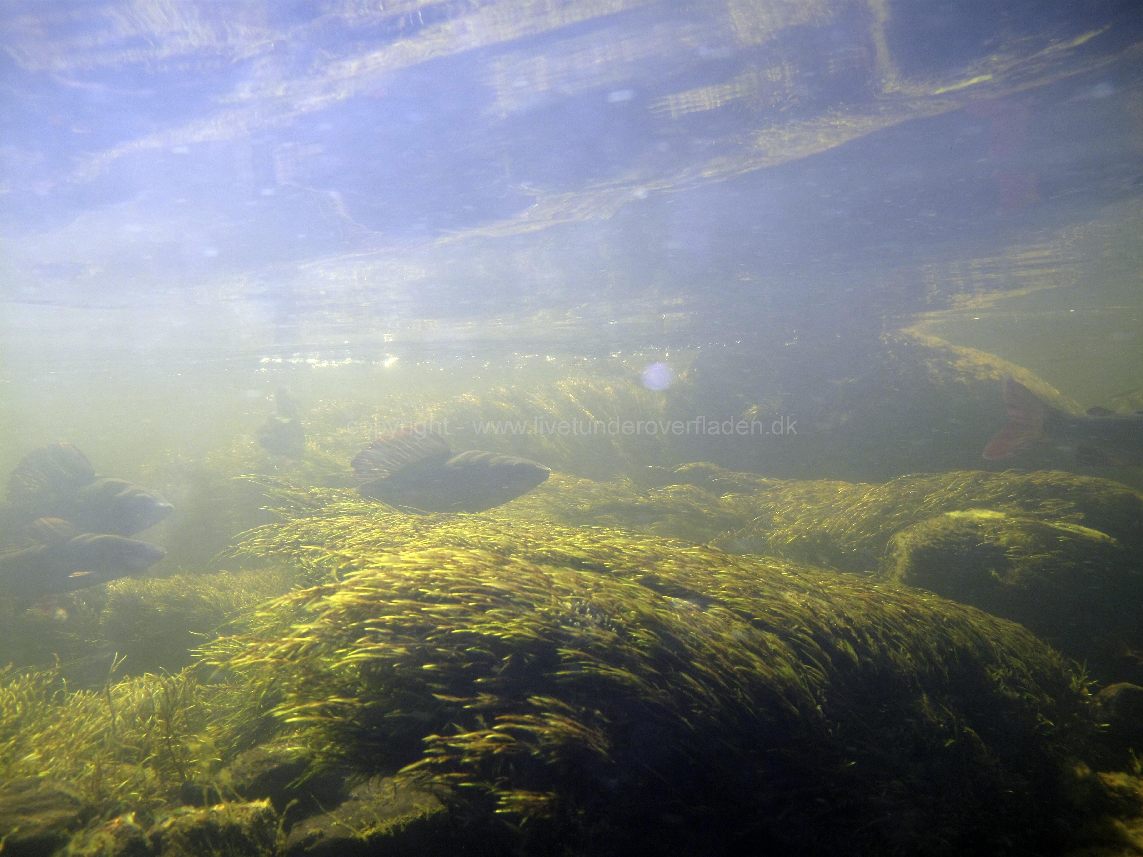 Freshwater habitat_Martin_Kielland 15
