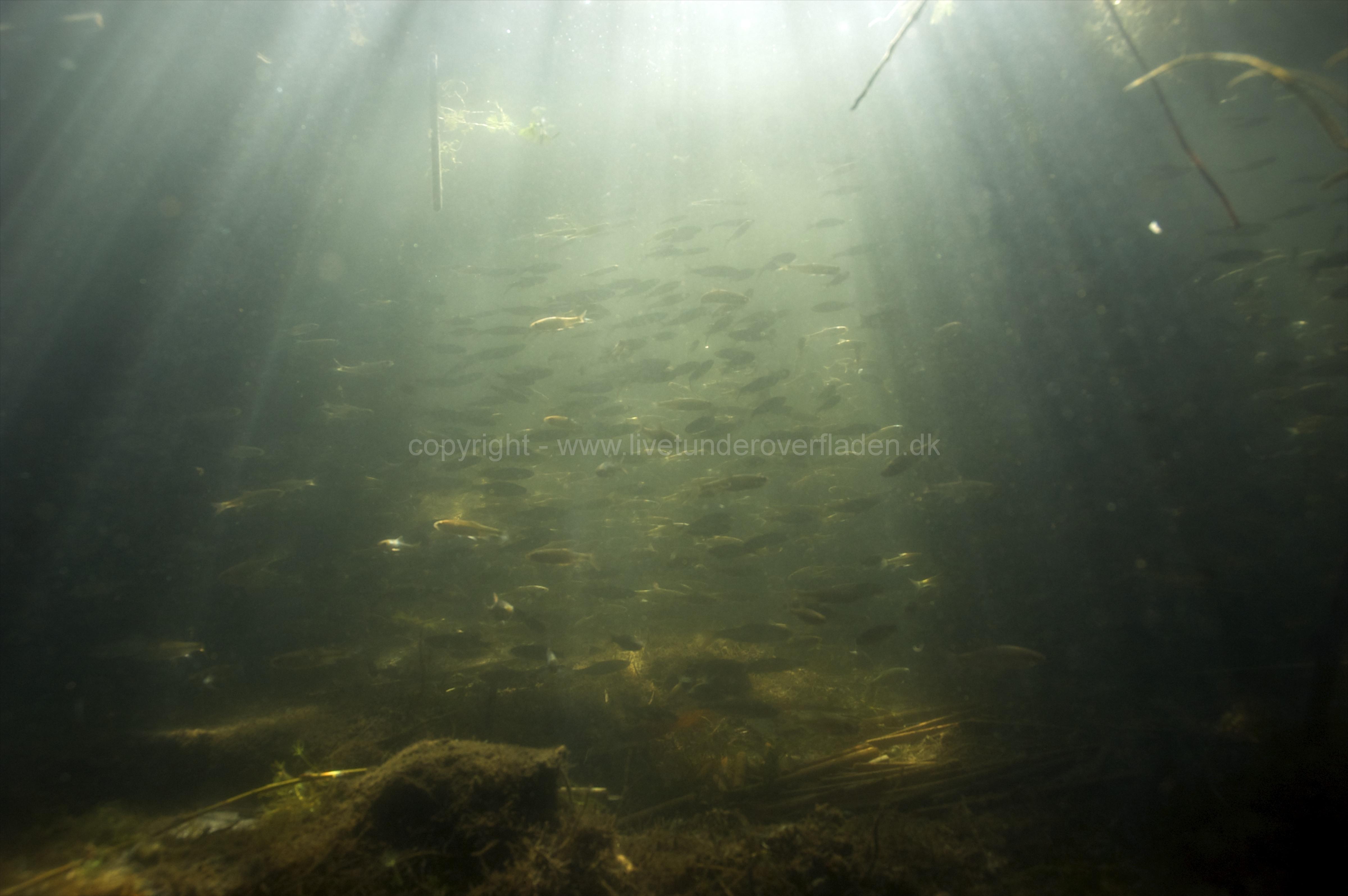 Freshwater habitat_Martin_Kielland 21