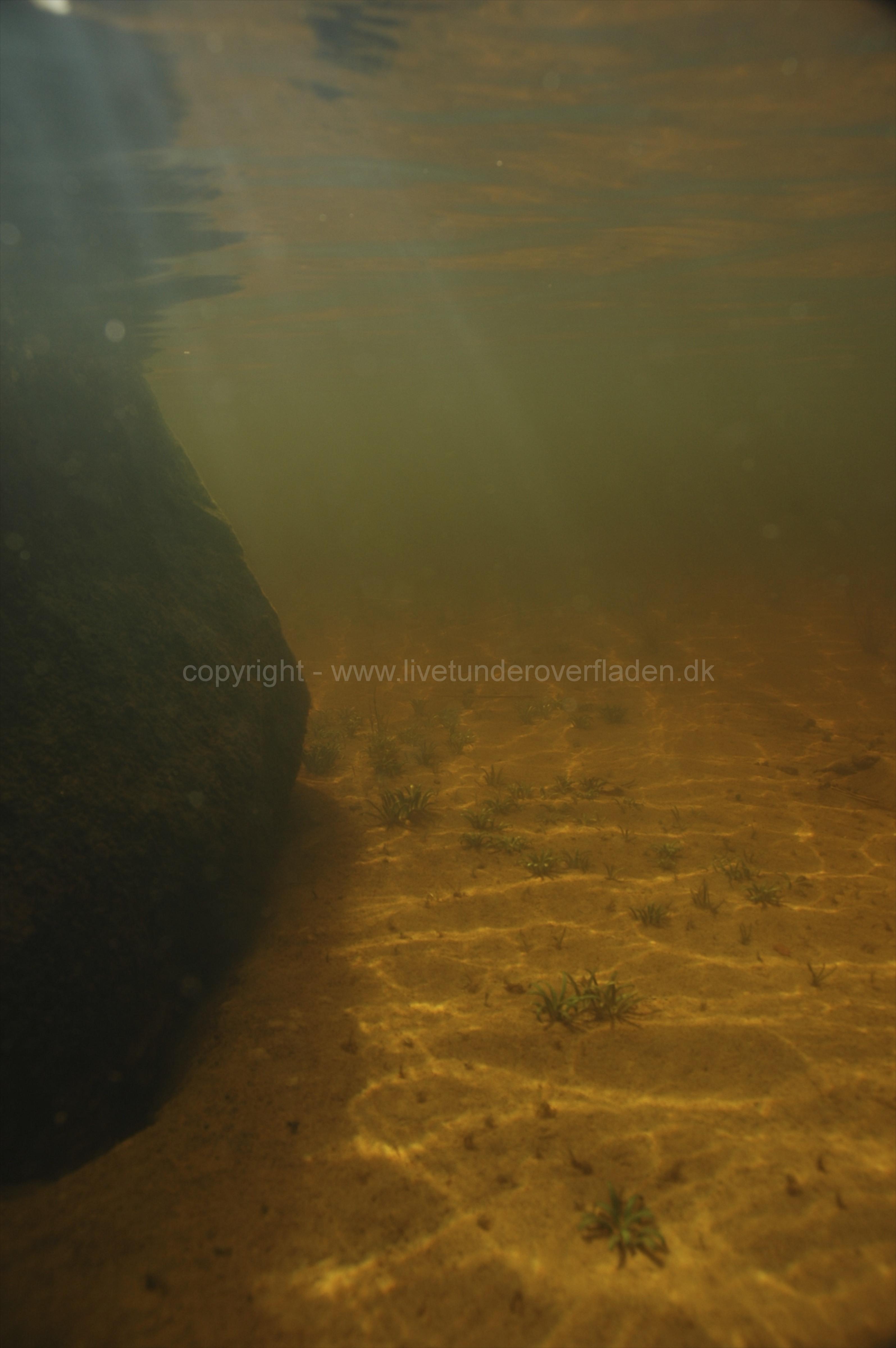 Freshwater habitat_Martin_Kielland 22