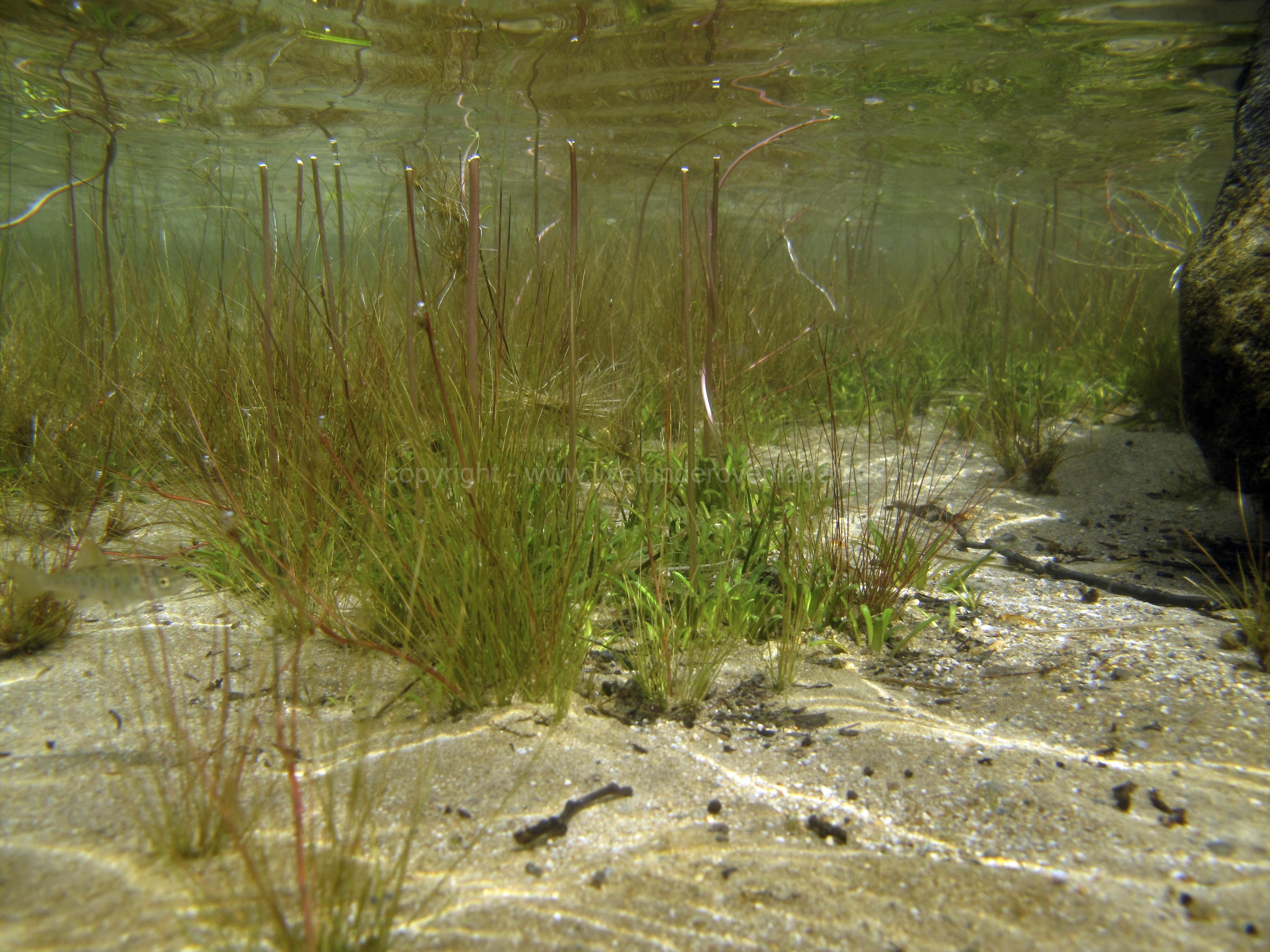Freshwater habitat_Martin_Kielland 3