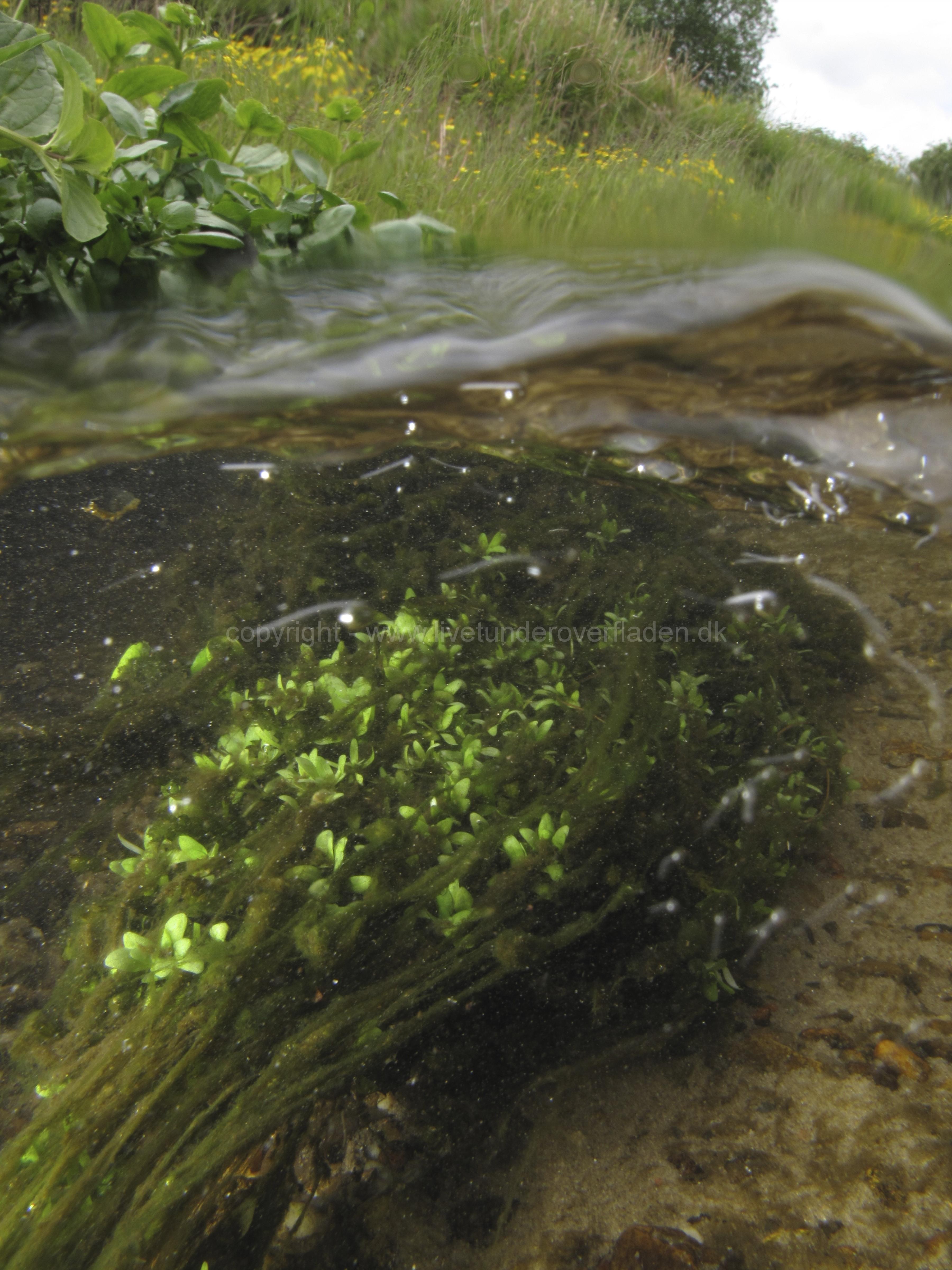 Freshwater habitat_Martin_Kielland 33
