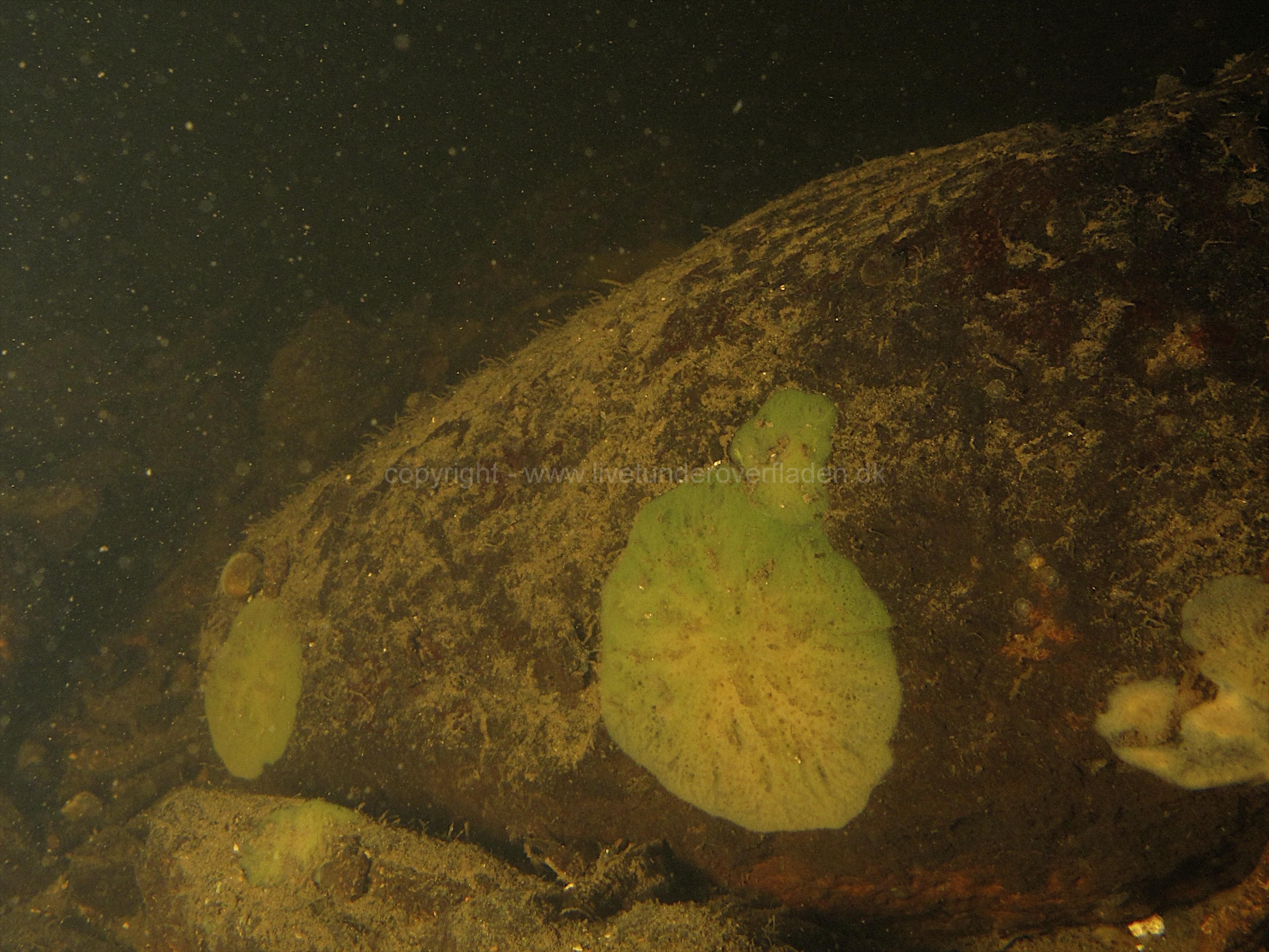 Freshwater habitat_Martin_Kielland 42