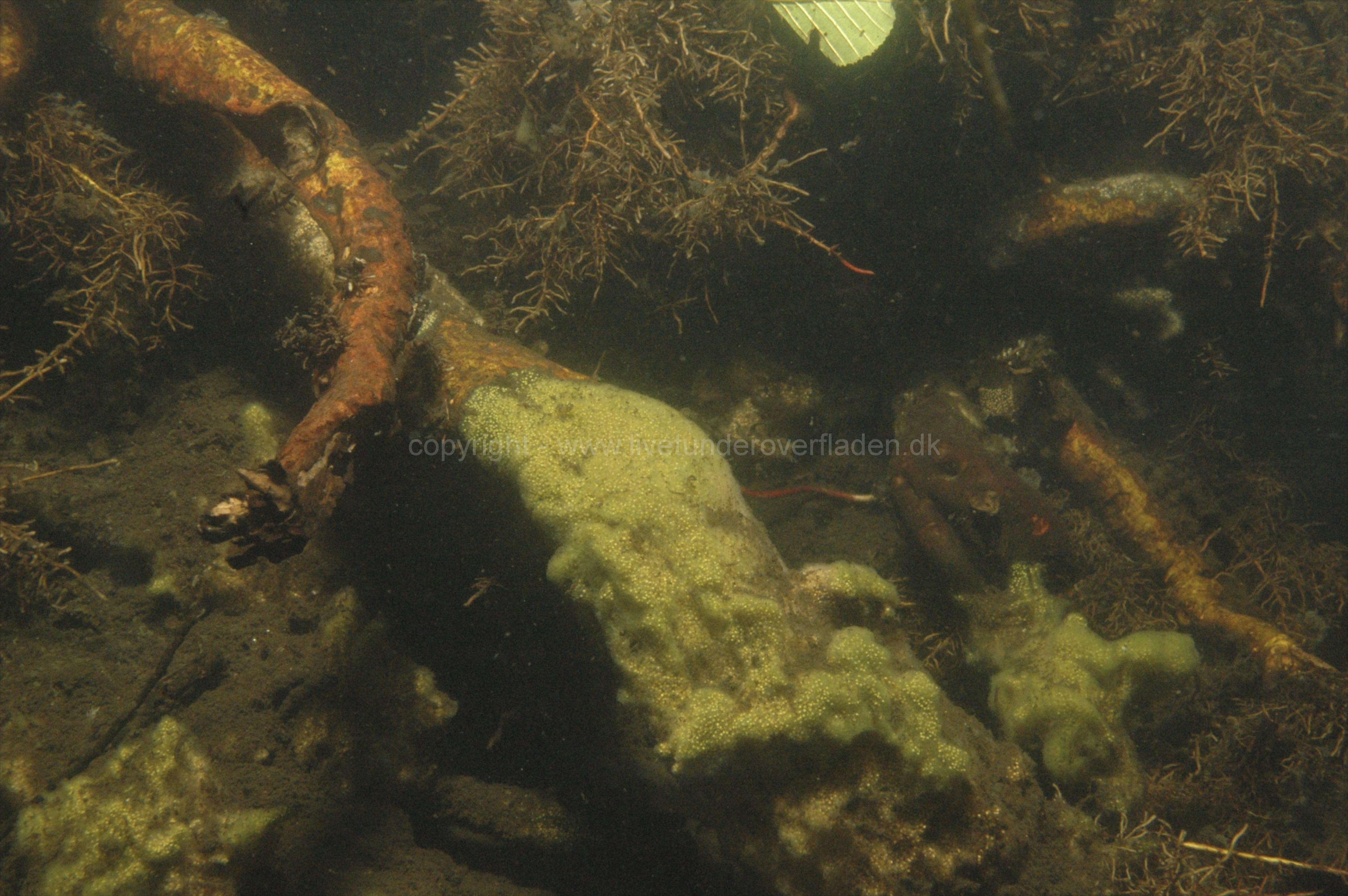 Freshwater habitat_Martin_Kielland 45