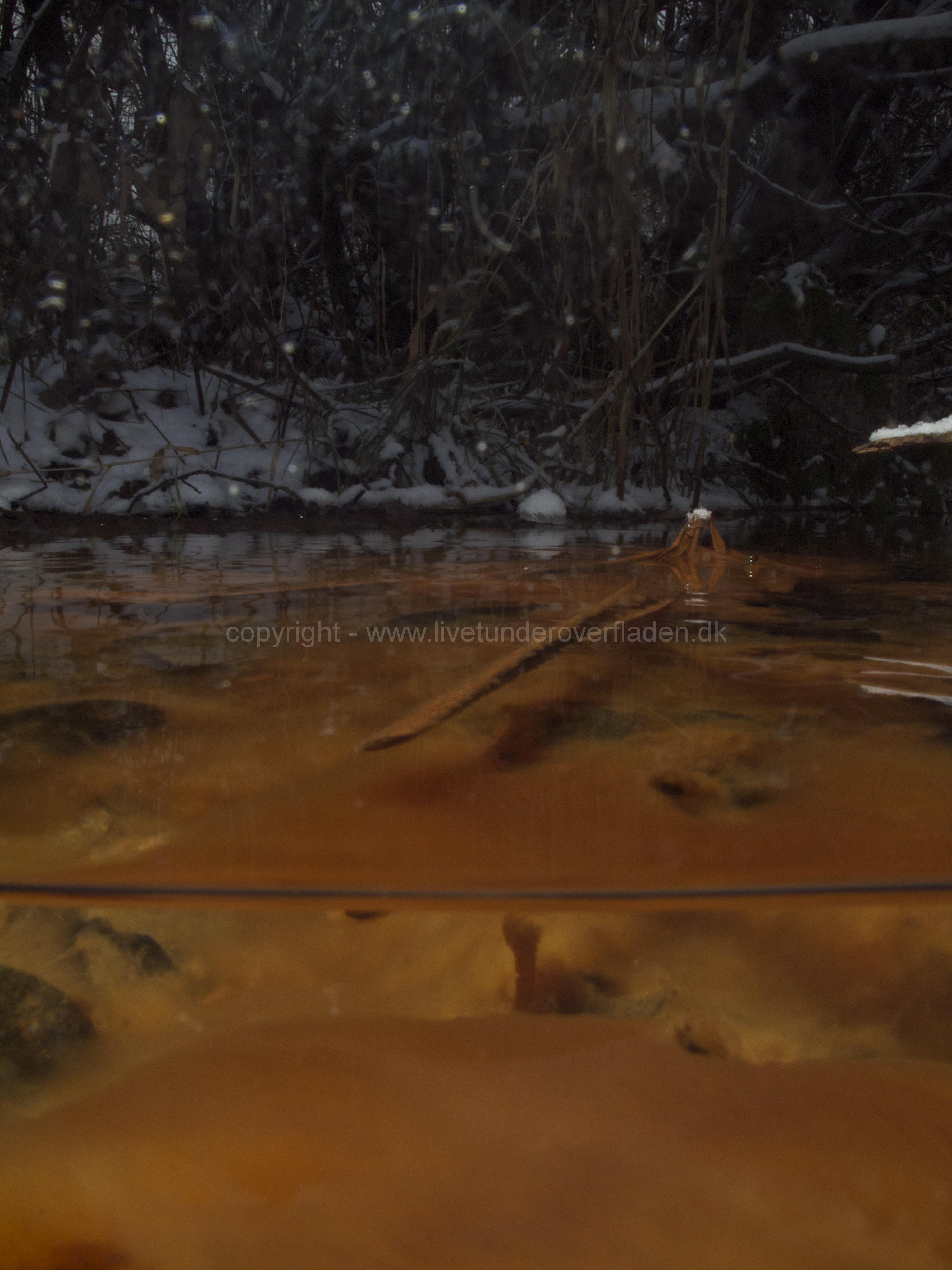 Freshwater habitat_Martin_Kielland 46
