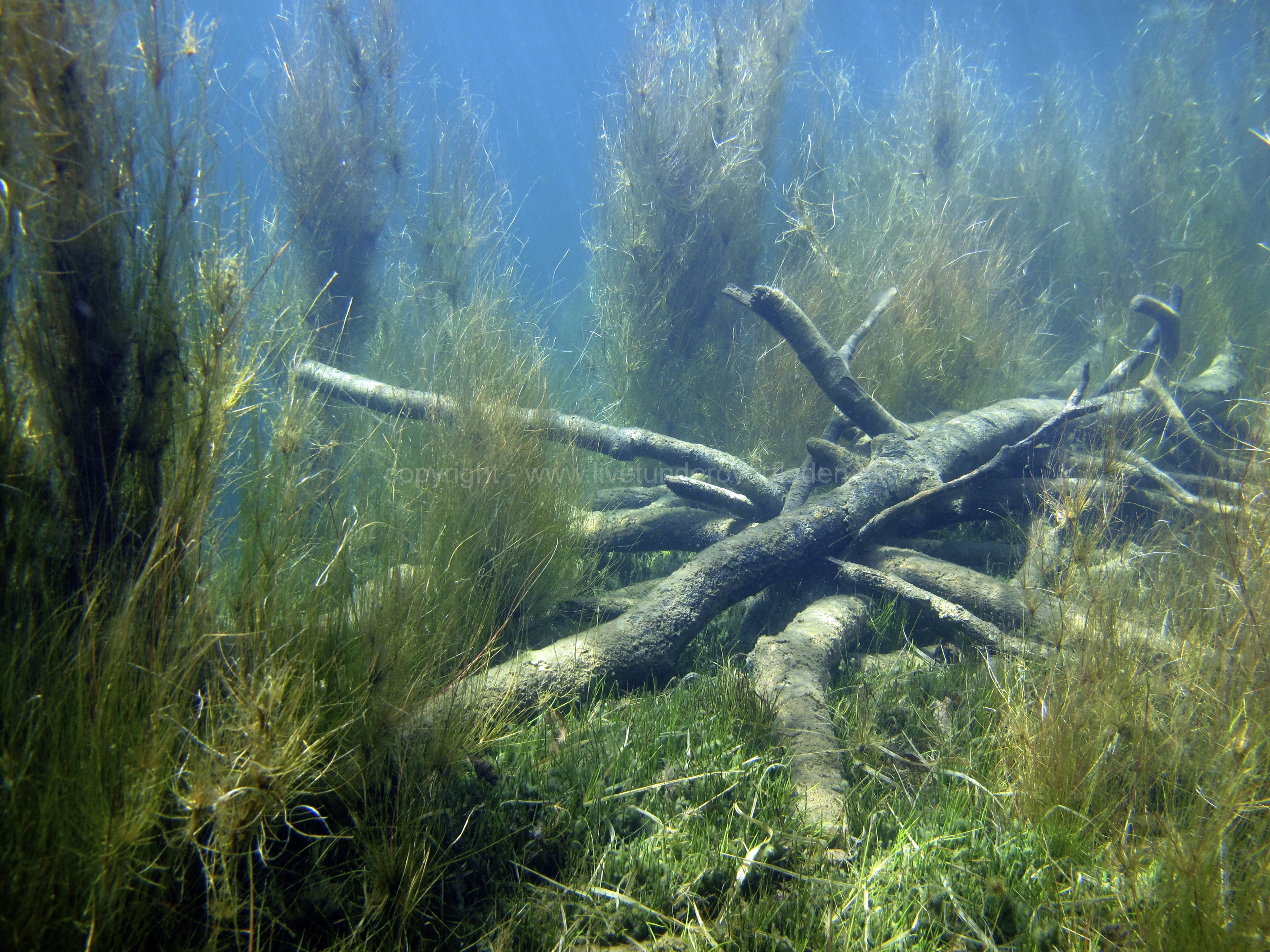 Freshwater habitat_Martin_Kielland 5