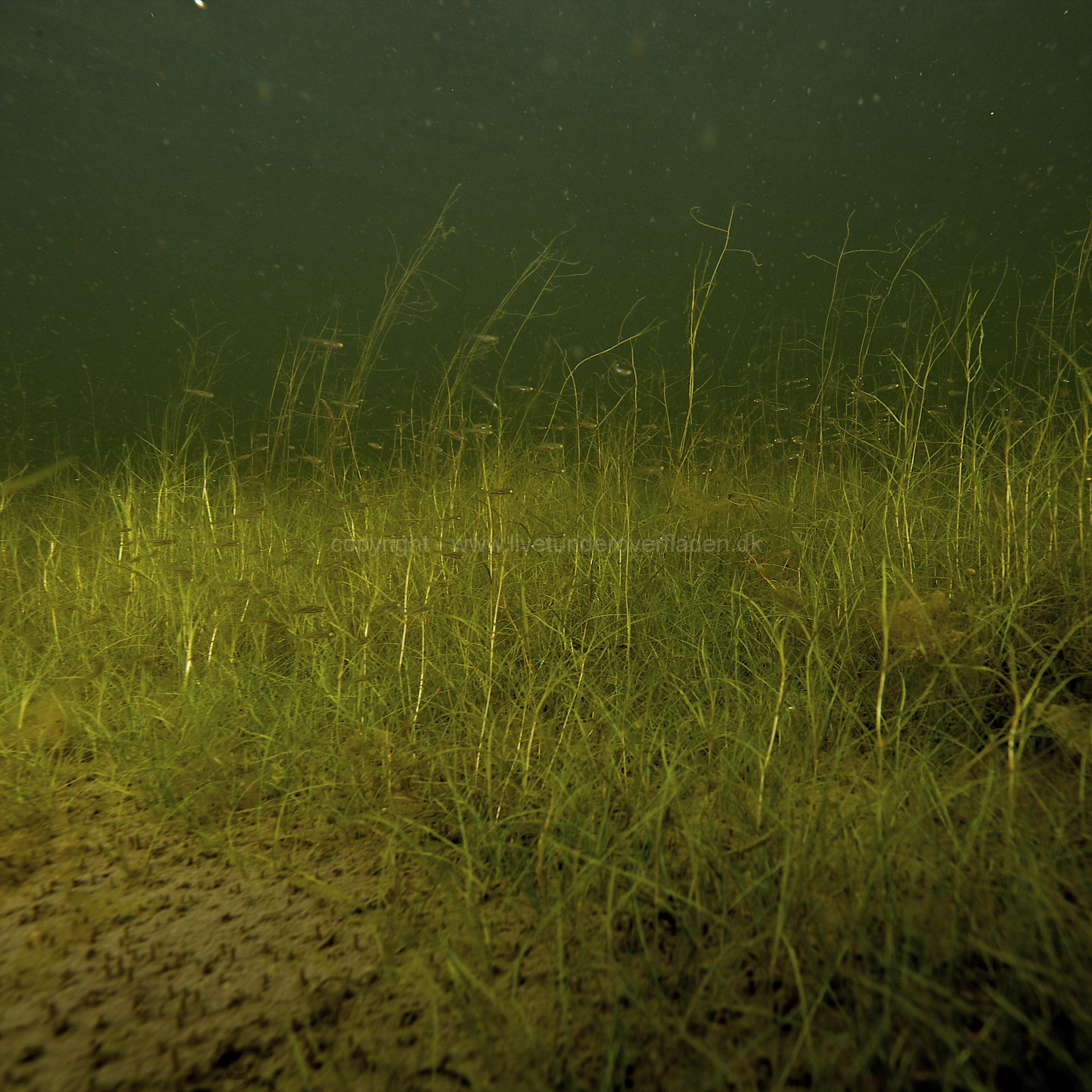 Freshwater habitat_Martin_Kielland 57