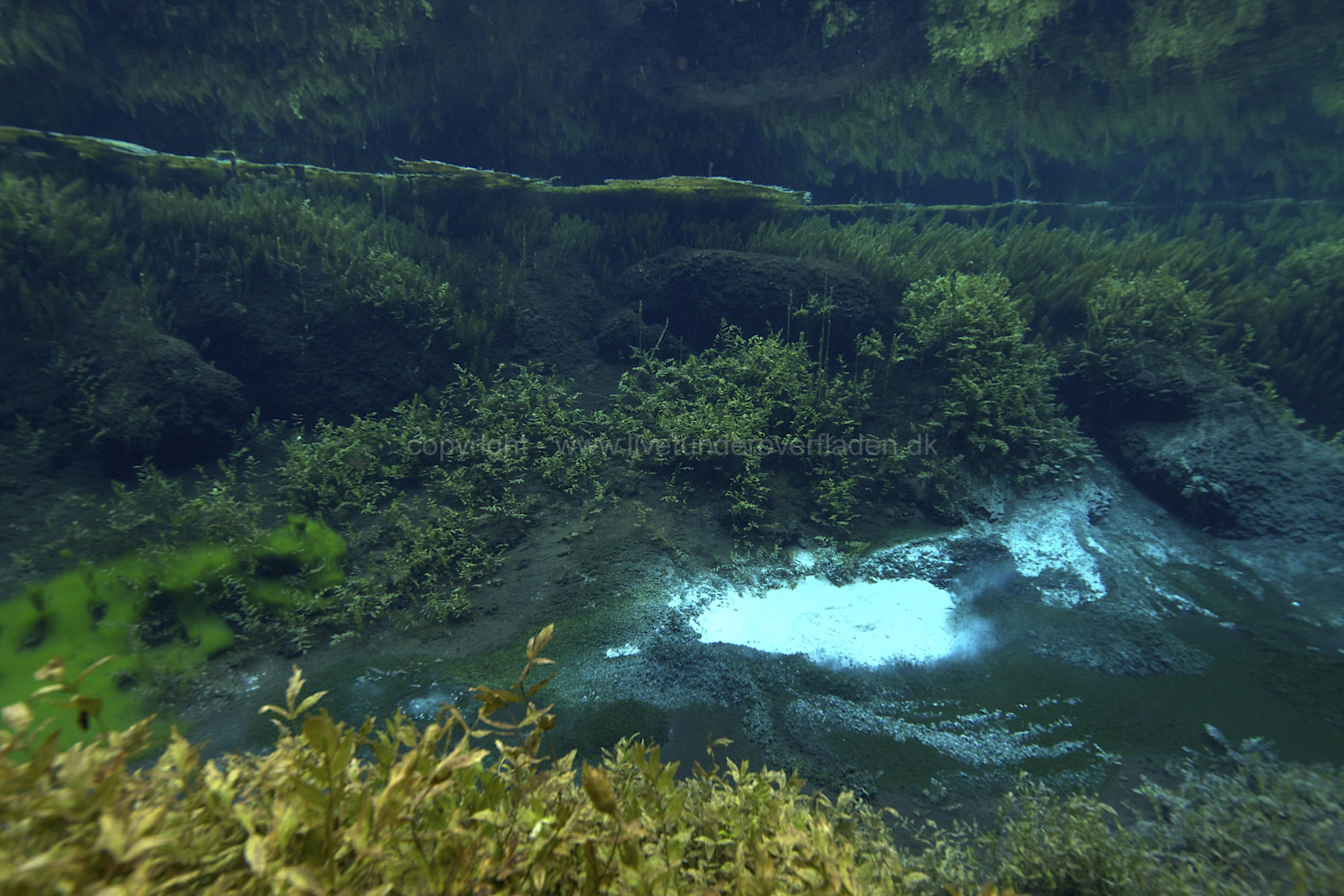 Freshwater habitat_Martin_Kielland 68