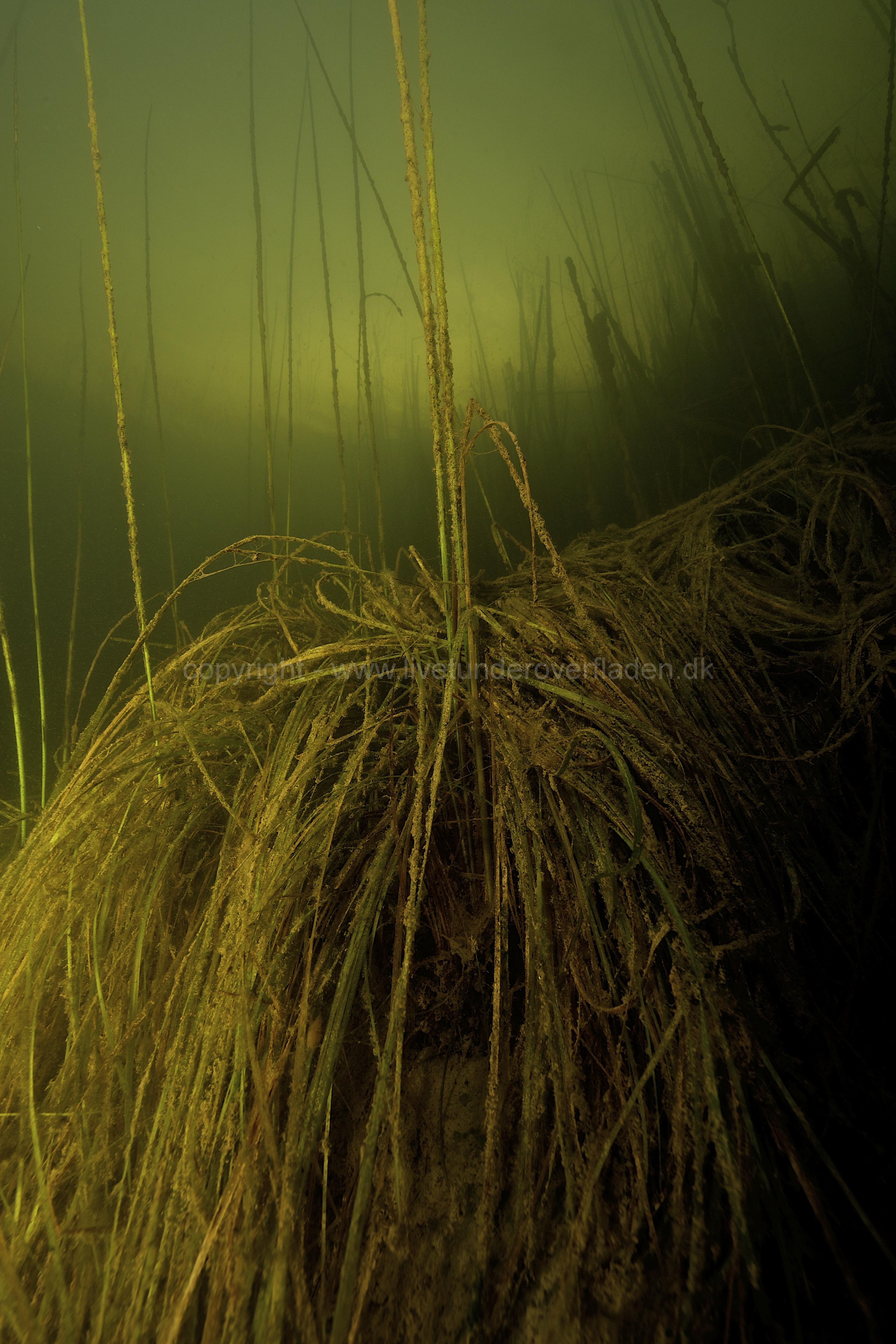 Freshwater habitat_Martin_Kielland 72