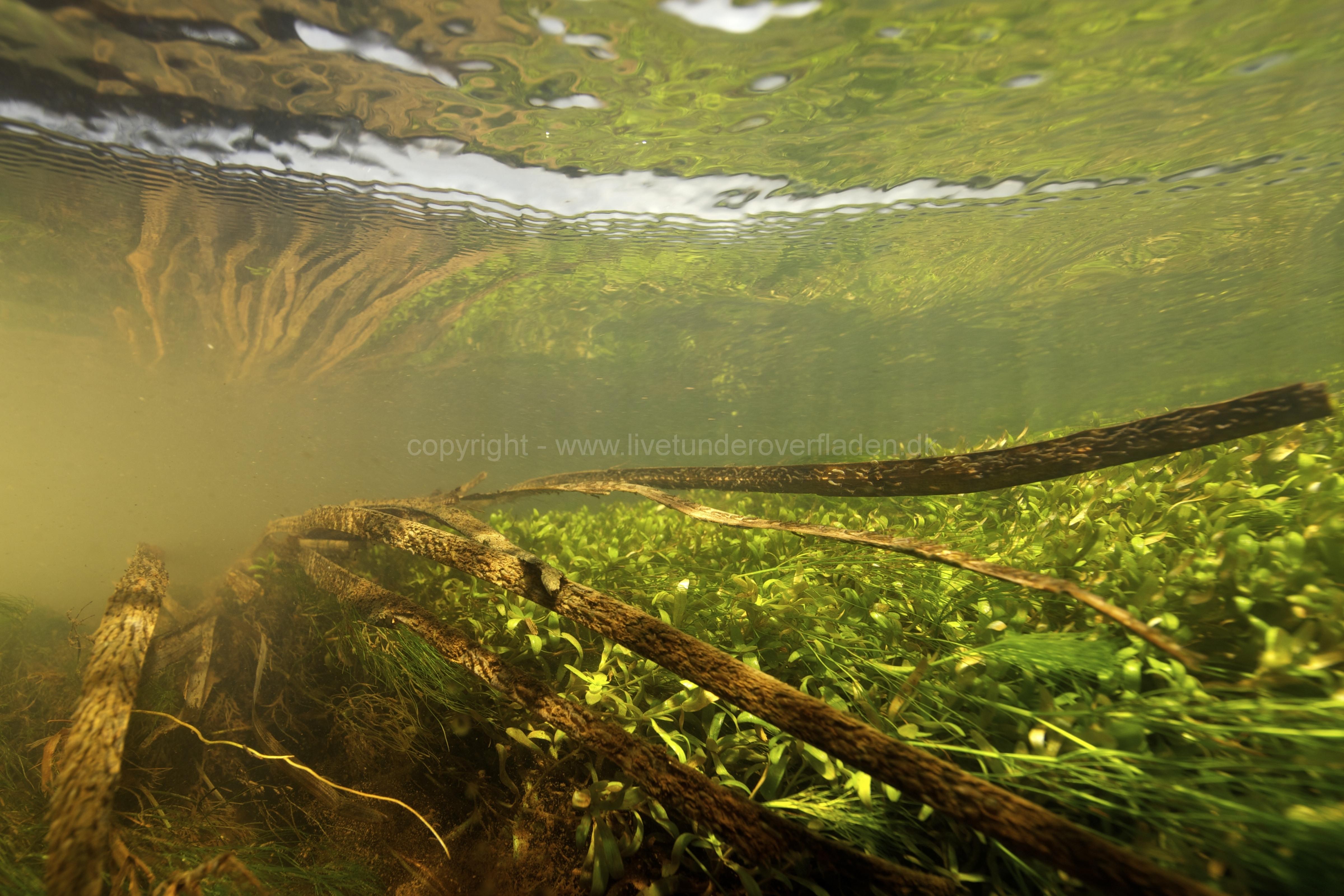 Freshwater habitat_Martin_Kielland 75
