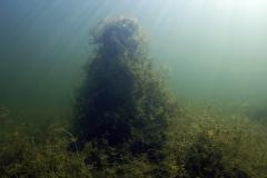 Freshwater habitat_Martin_Kielland 16