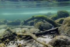 Freshwater habitat_Martin_Kielland 20
