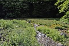 Freshwater habitat_Martin_Kielland 29
