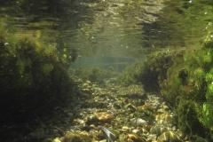 Freshwater habitat_Martin_Kielland 34