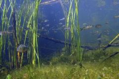 Freshwater habitat_Martin_Kielland 37