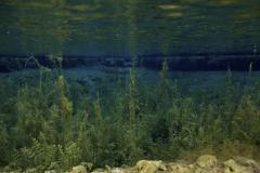 Freshwater habitat_Martin_Kielland 49