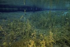 Freshwater habitat_Martin_Kielland 51