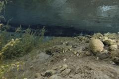 Freshwater habitat_Martin_Kielland 52