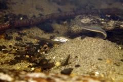Freshwater habitat_Martin_Kielland 53