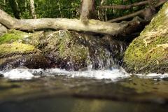 Freshwater habitat_Martin_Kielland 54