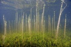 Freshwater habitat_Martin_Kielland 64