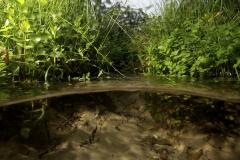 Freshwater habitat_Martin_Kielland 65
