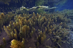 Freshwater habitat_Martin_Kielland 67