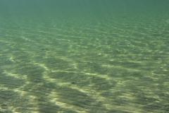 Freshwater habitat_Martin_Kielland 80