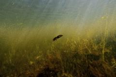 Freshwater habitat_Martin_Kielland 93