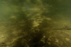 Freshwater habitat_Martin_Kielland 94