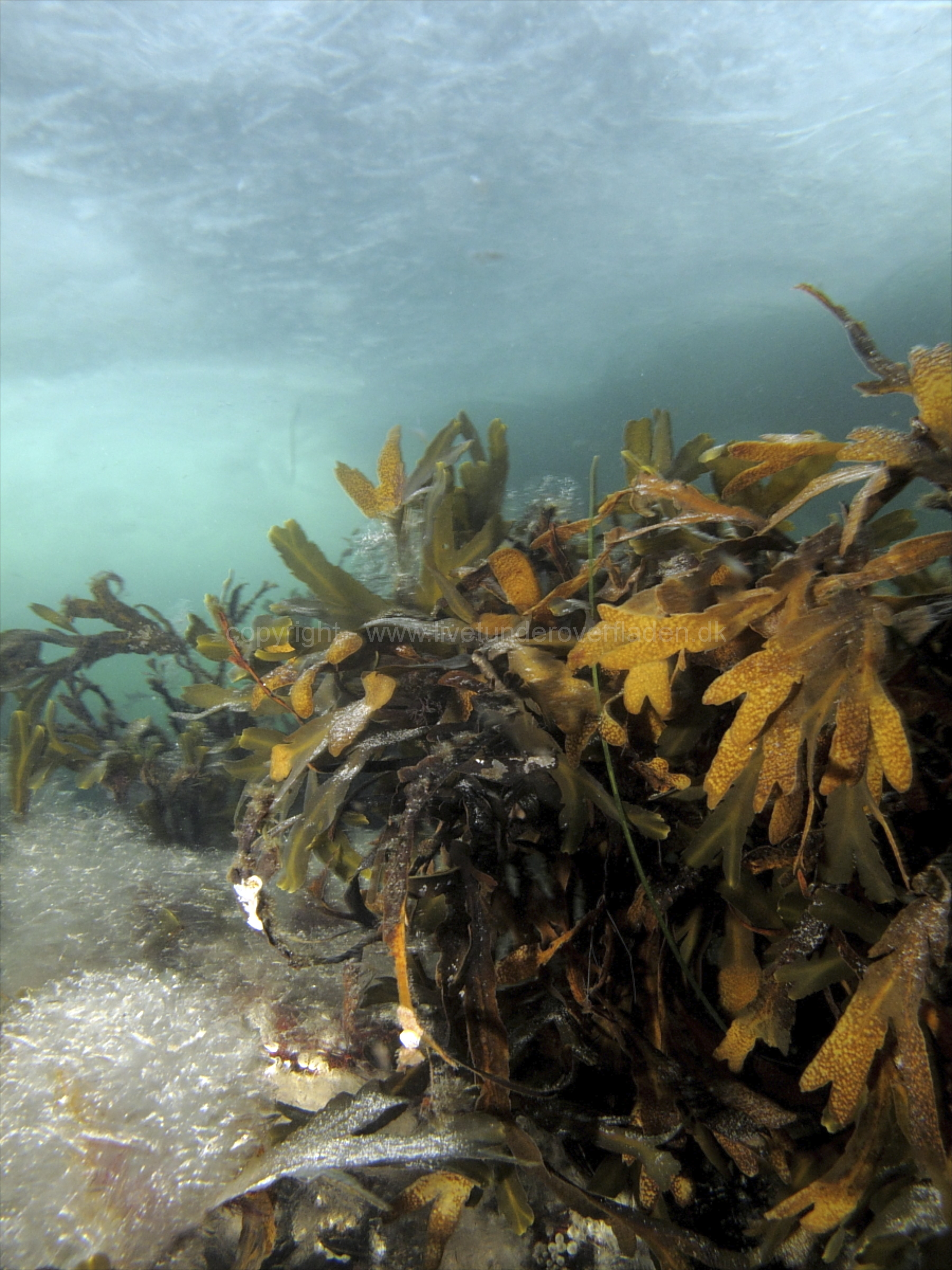 Marine habitat_Martin_Kielland 17