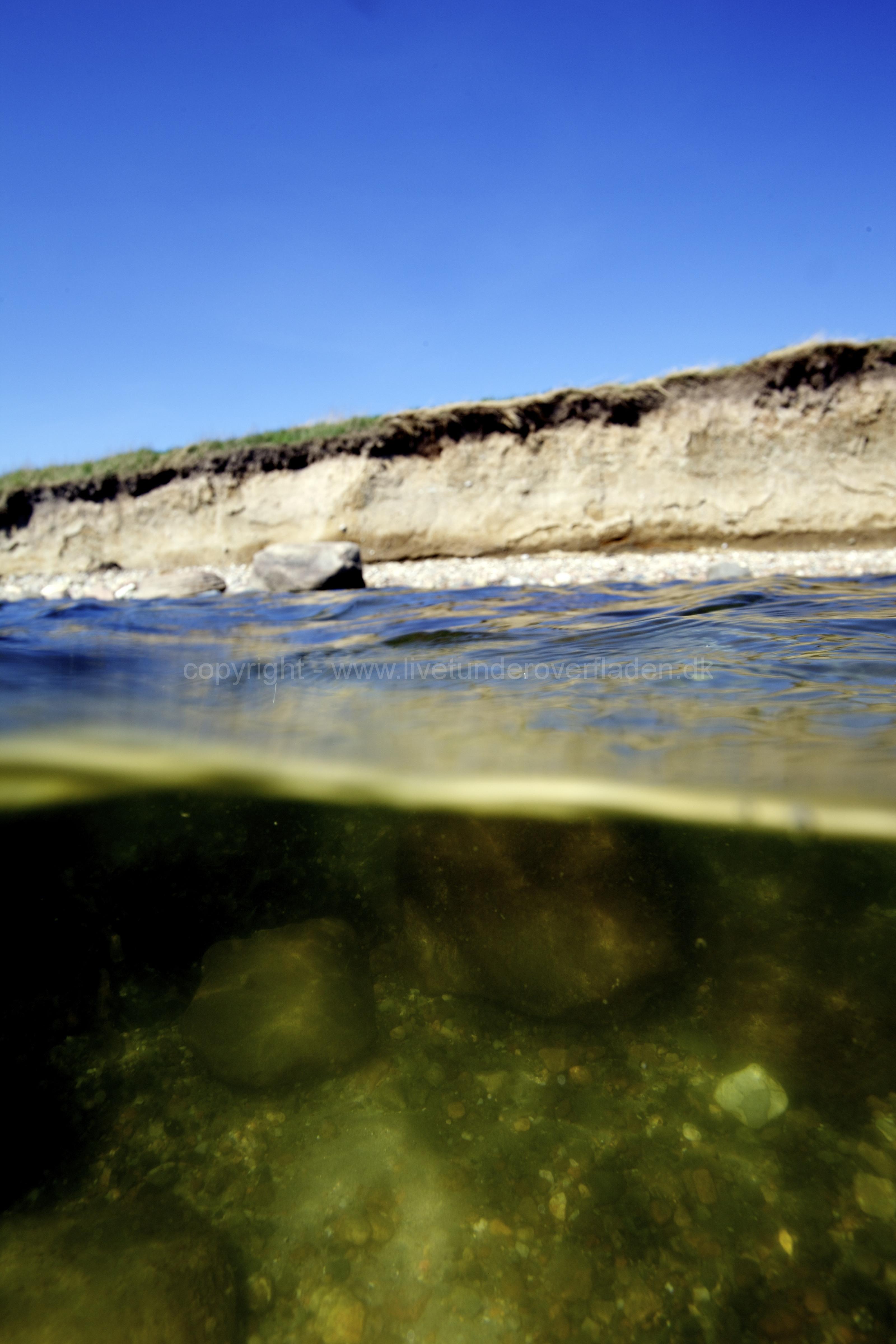 Marine habitat_Martin_Kielland 24