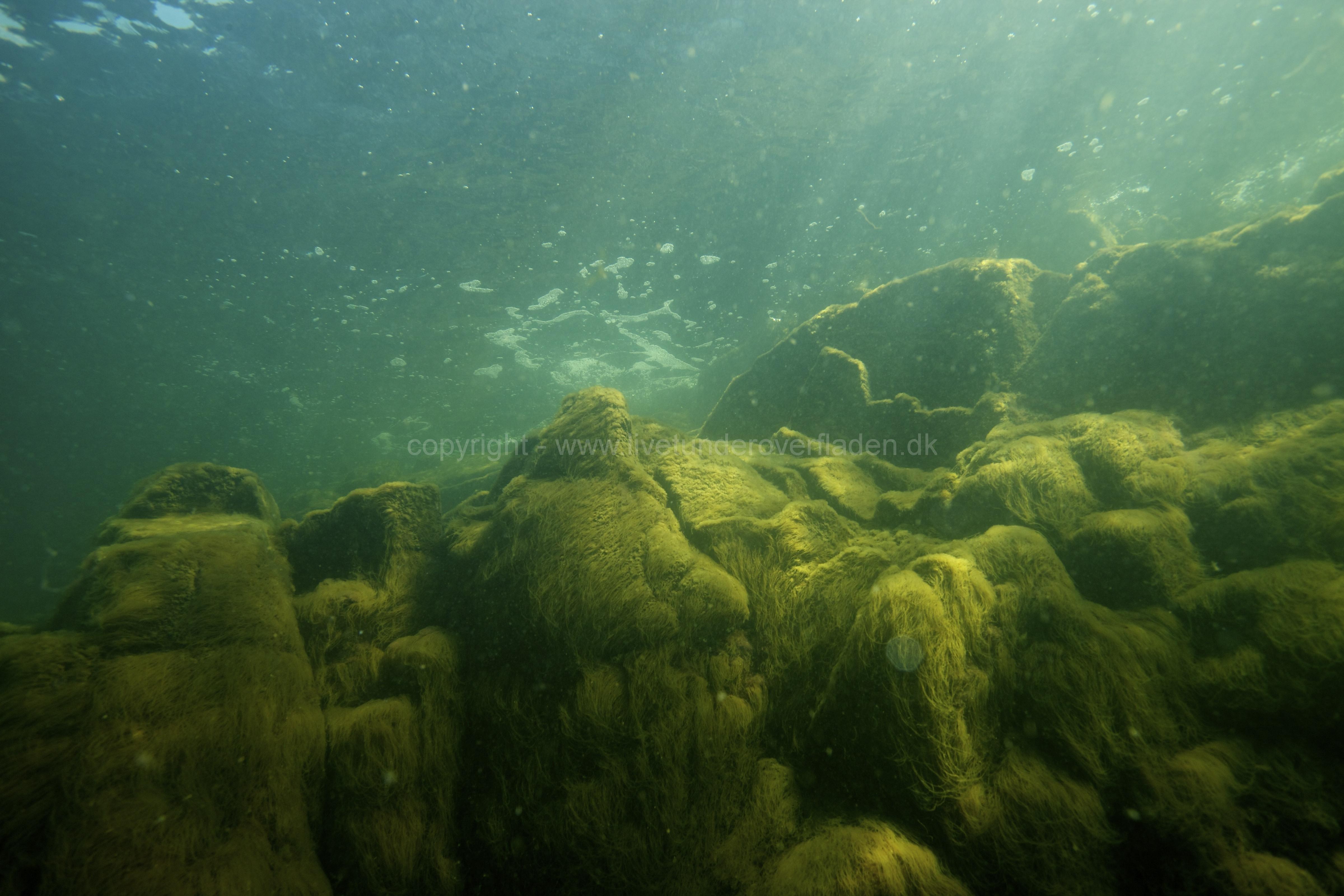 Marine habitat_Martin_Kielland 30