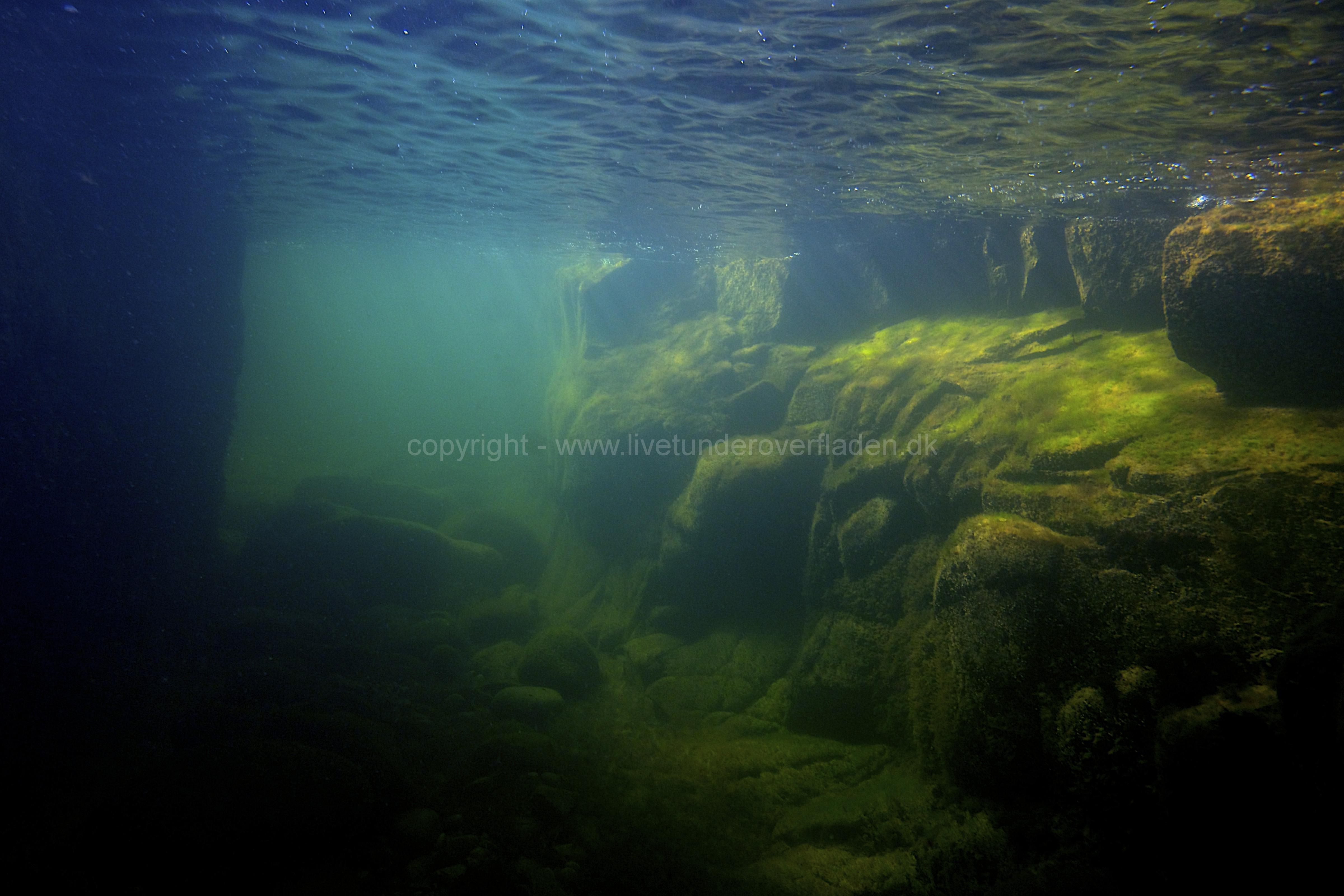 Marine habitat_Martin_Kielland 33