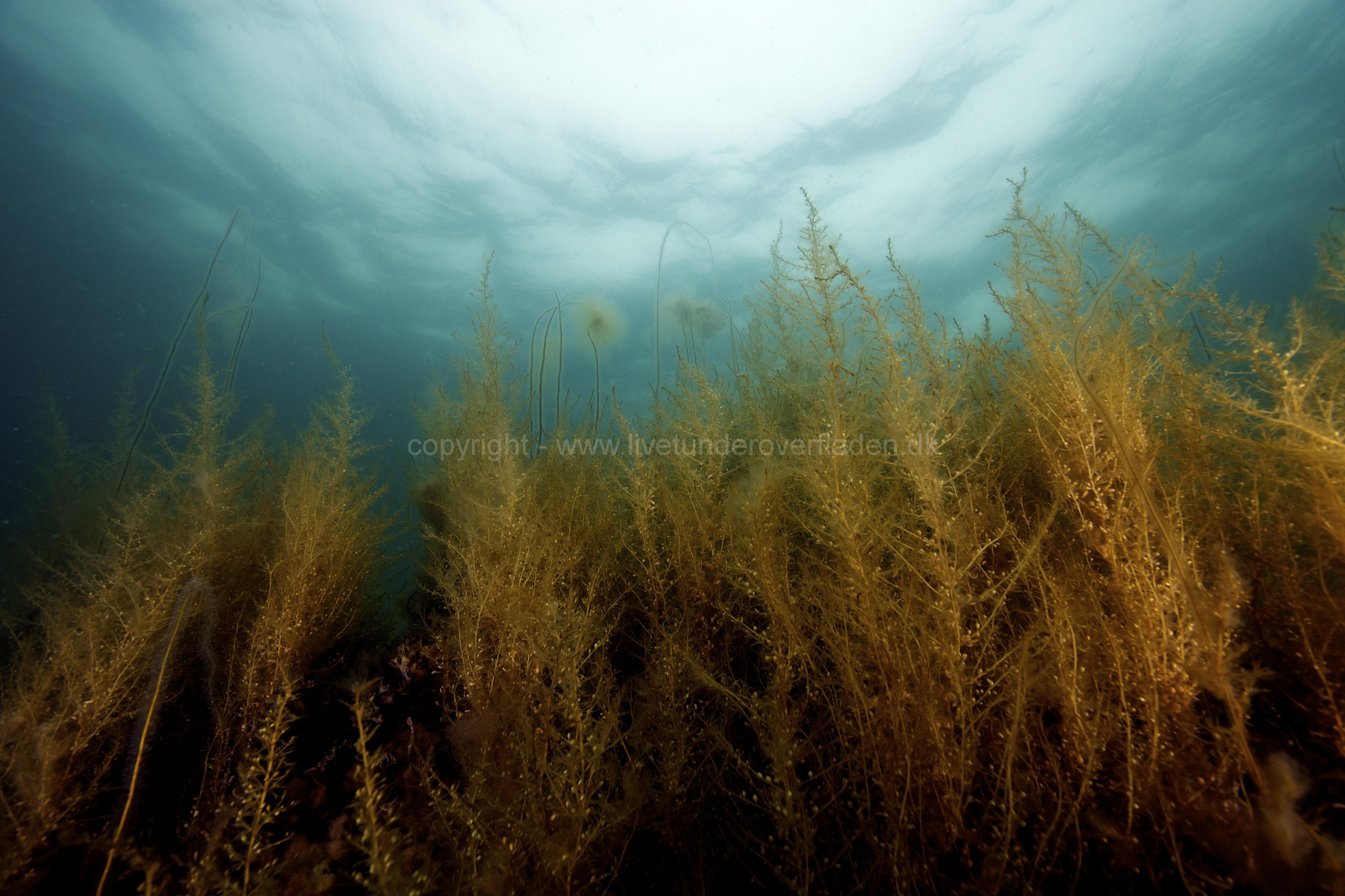 Marine habitat_Martin_Kielland 36