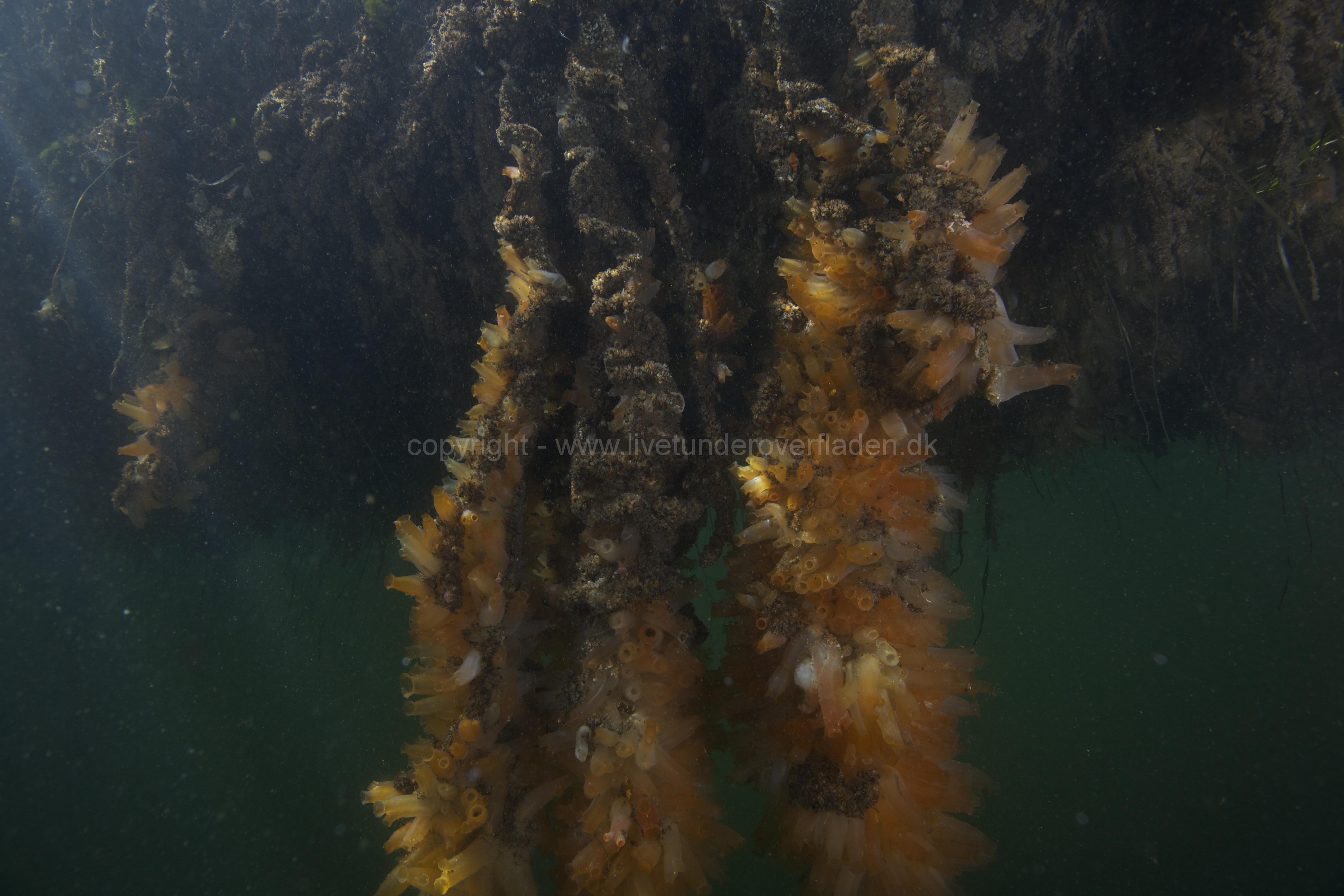 Marine habitat_Martin_Kielland 43
