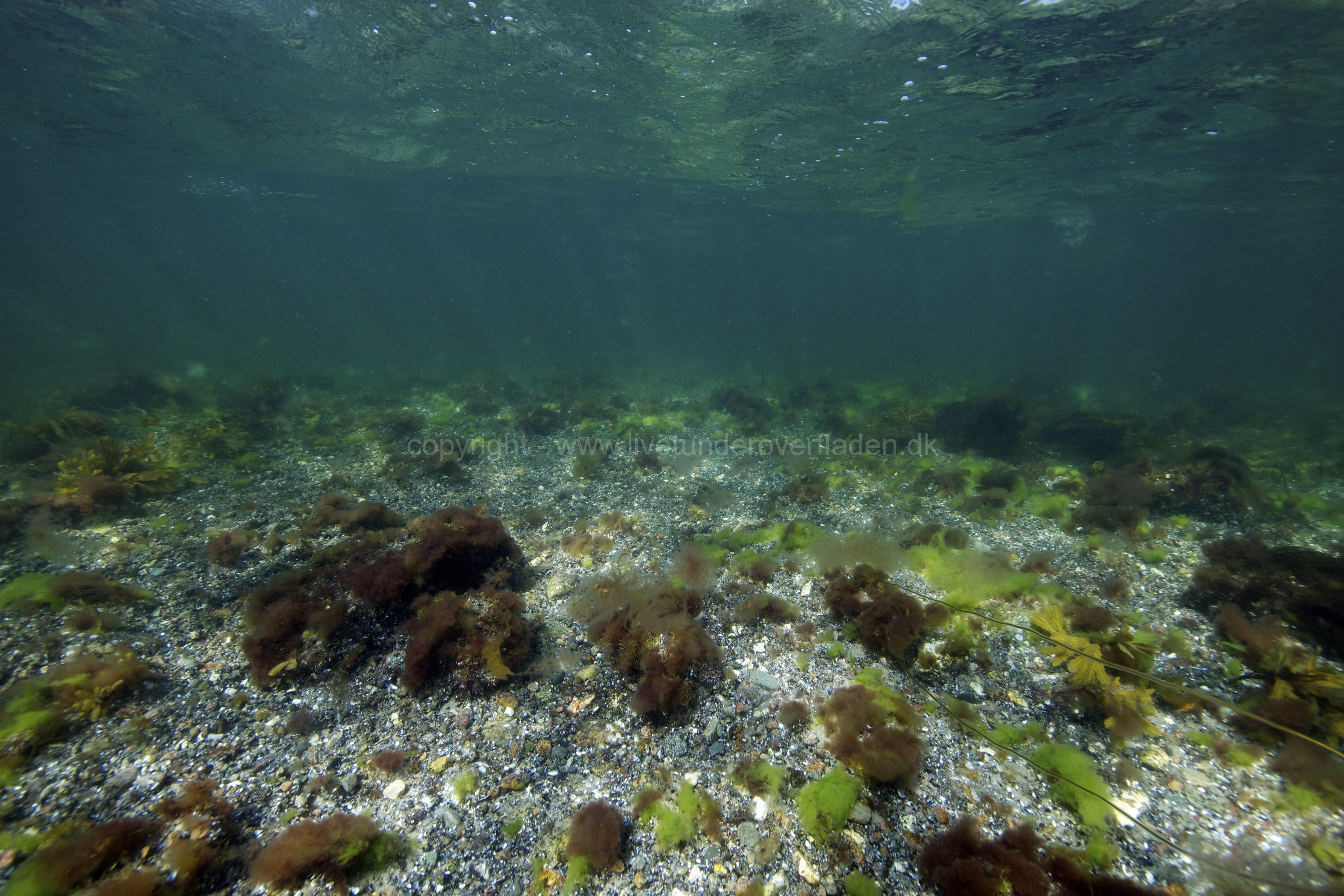 Marine habitat_Martin_Kielland 48