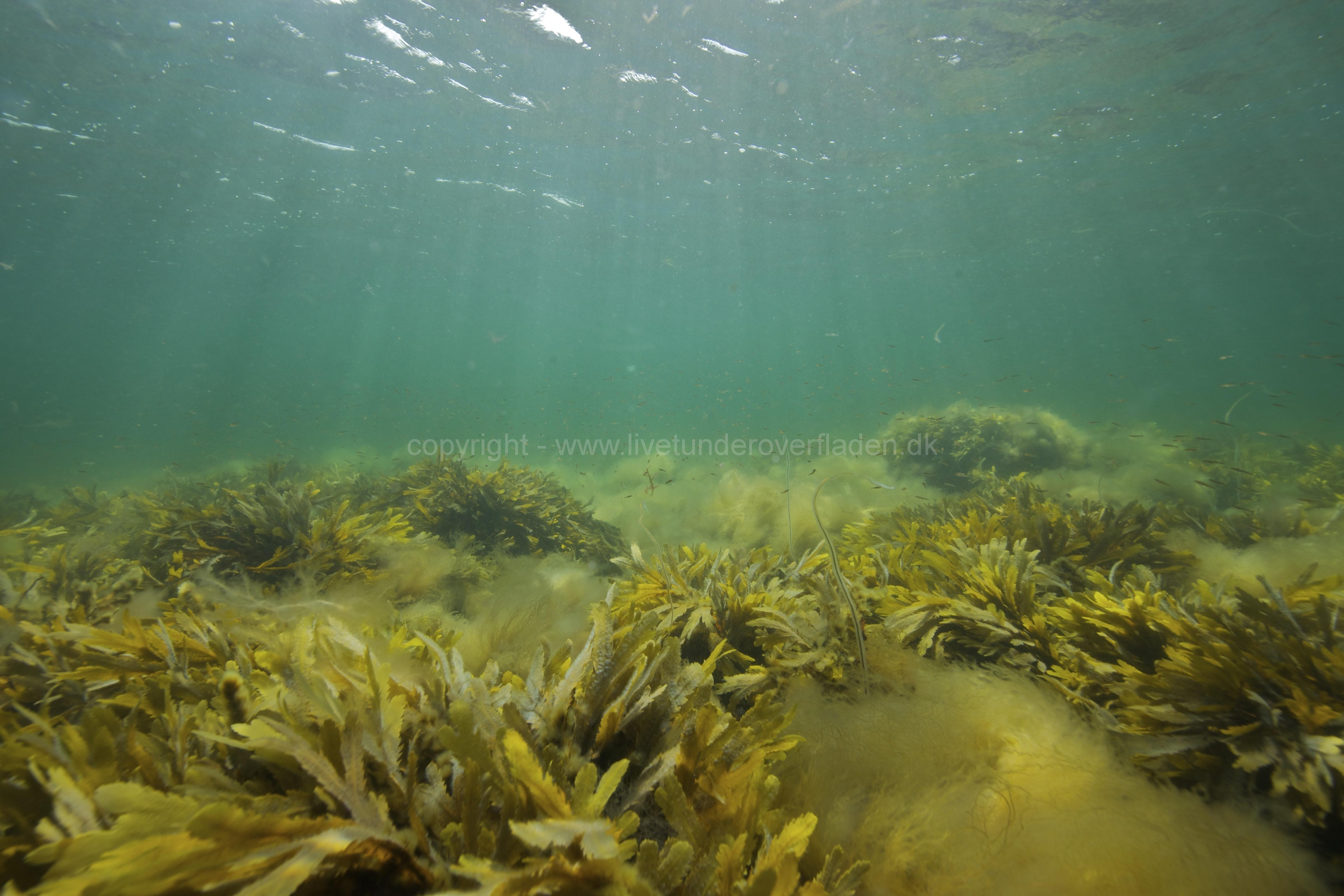 Marine habitat_Martin_Kielland 50