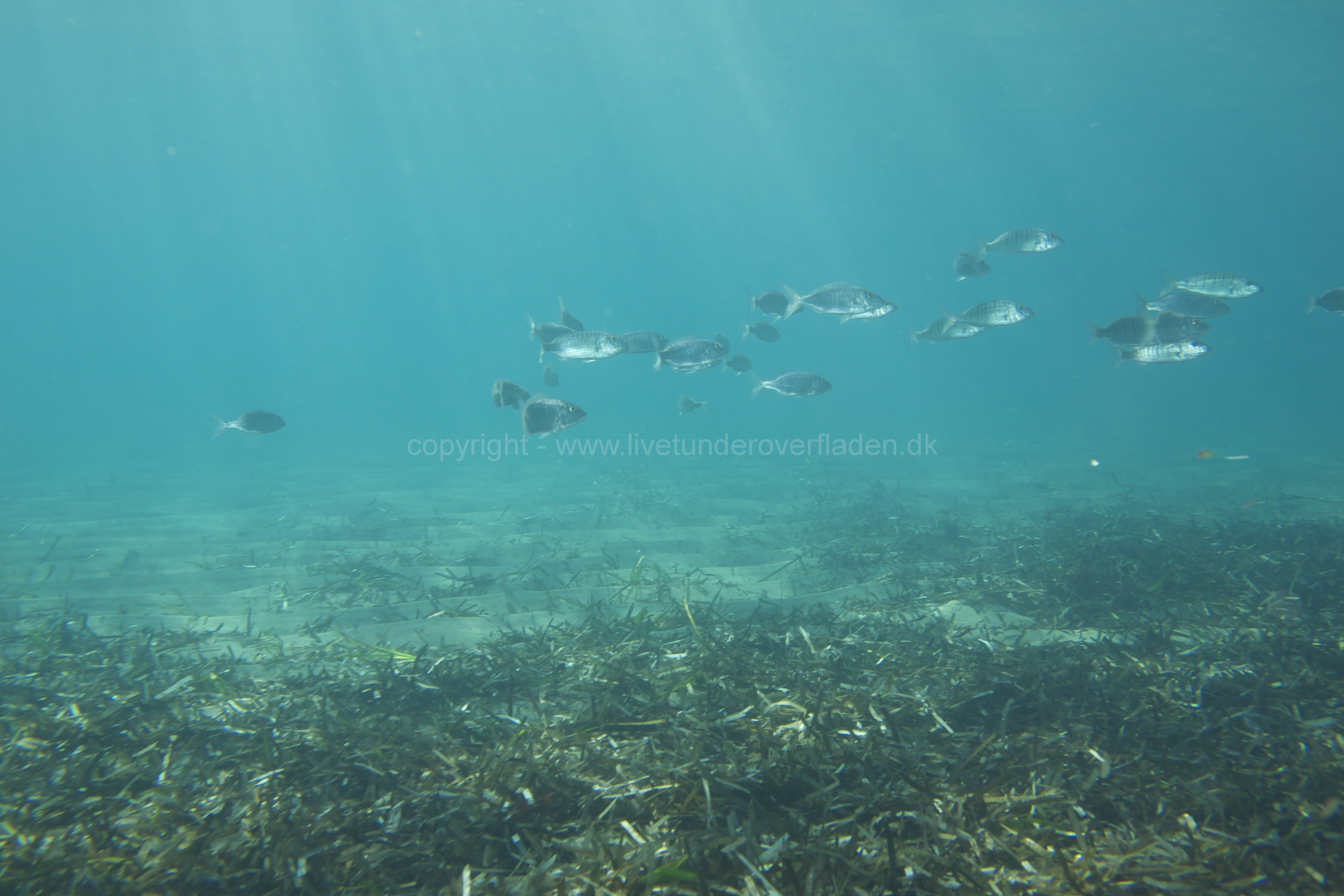 Marine habitat_Martin_Kielland 73