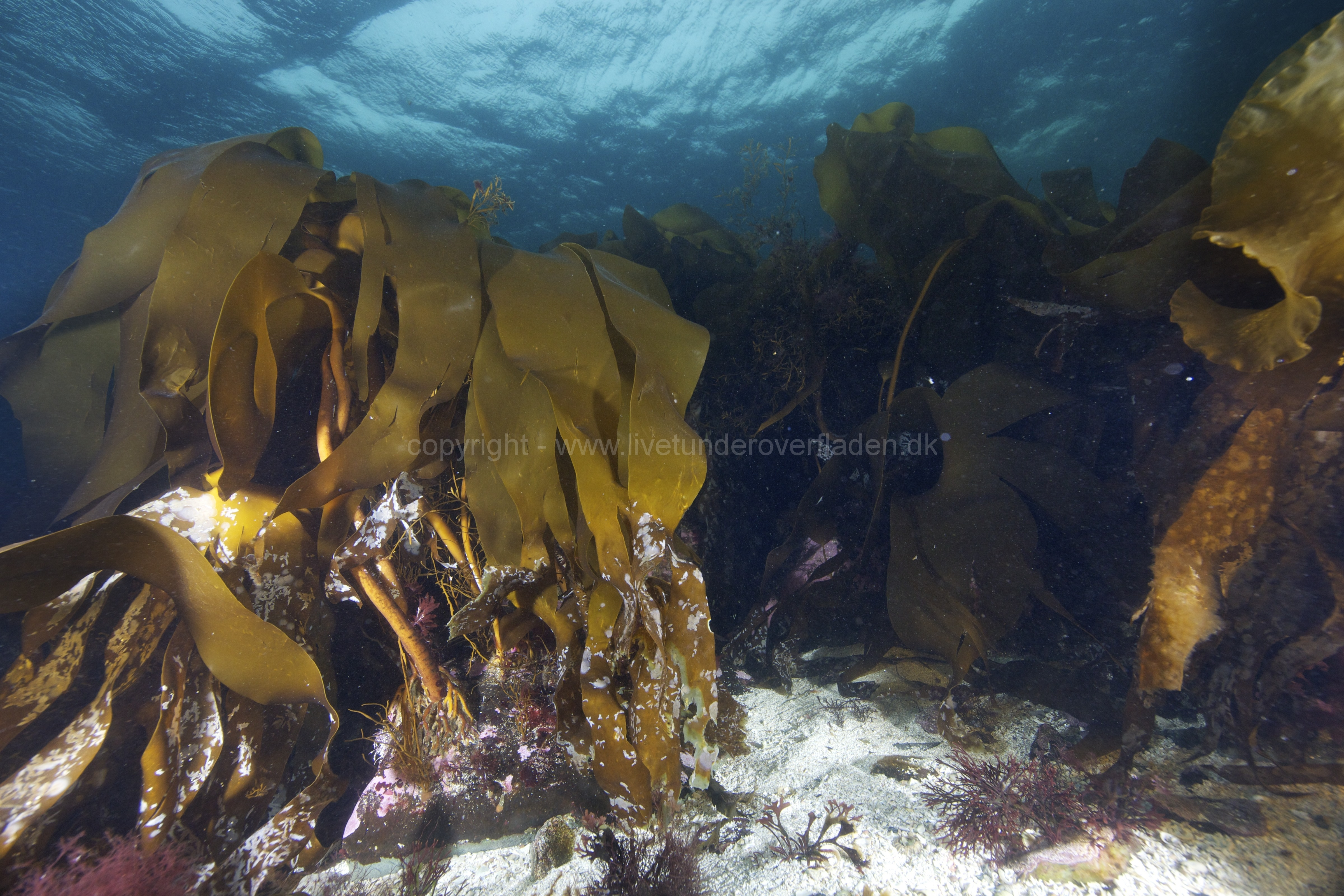 Marine habitat_Martin_Kielland 83