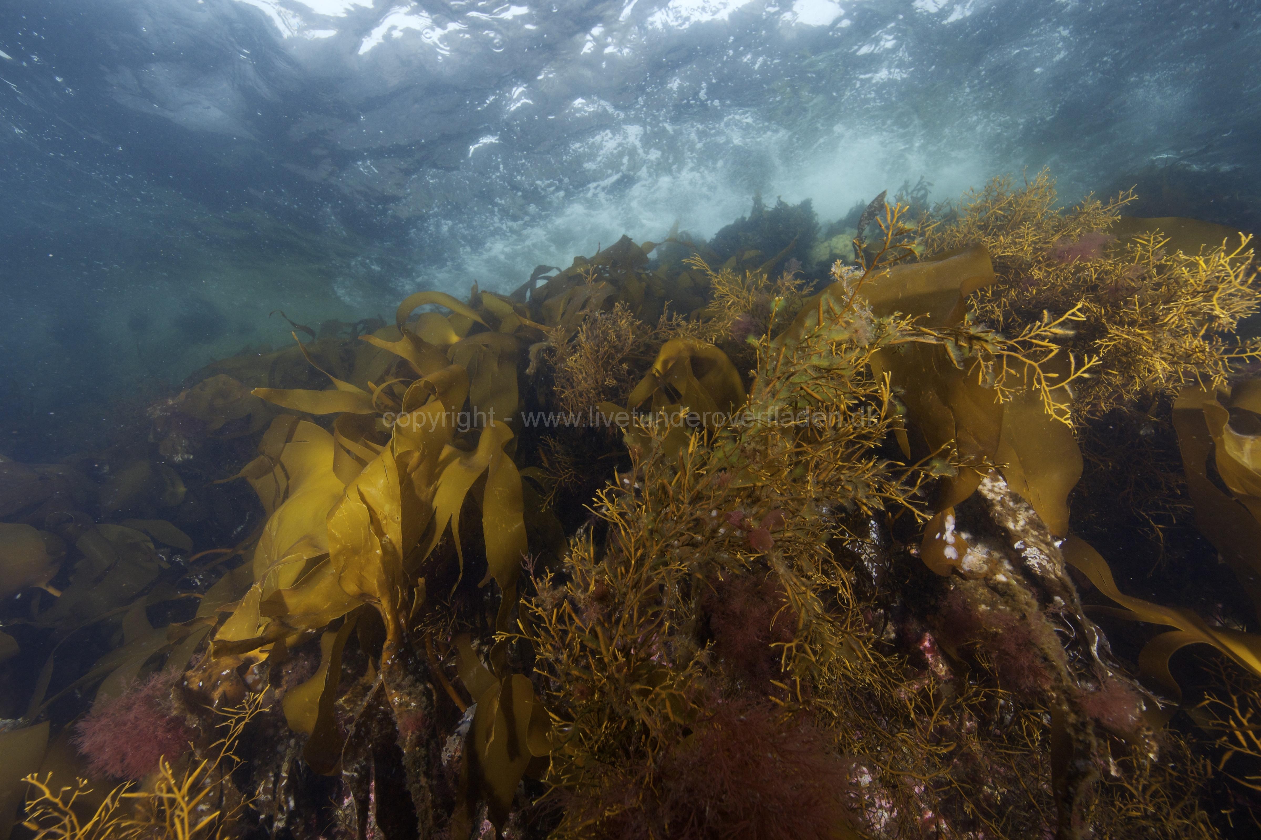 Marine habitat_Martin_Kielland 84