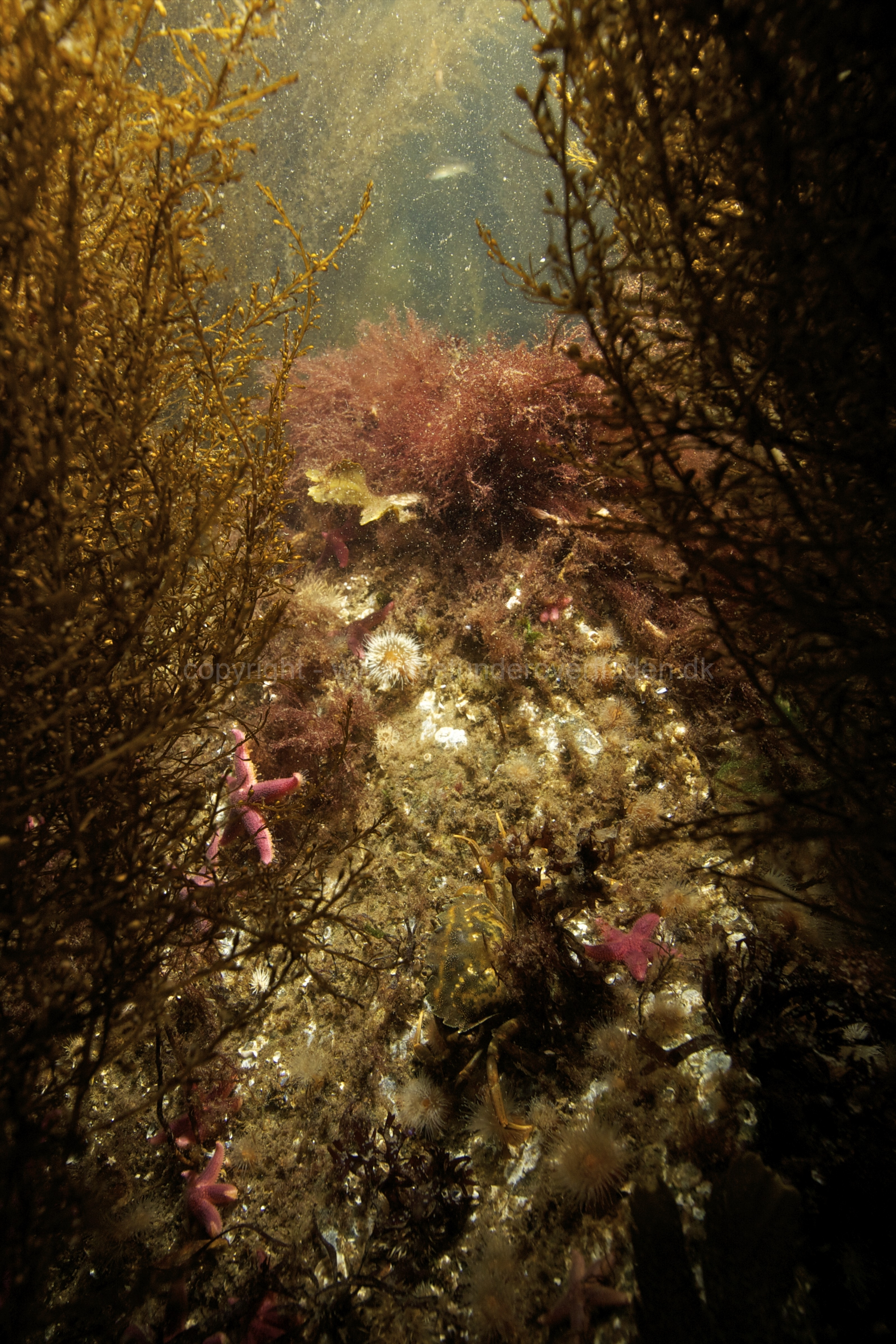 Marine habitat_Martin_Kielland 88